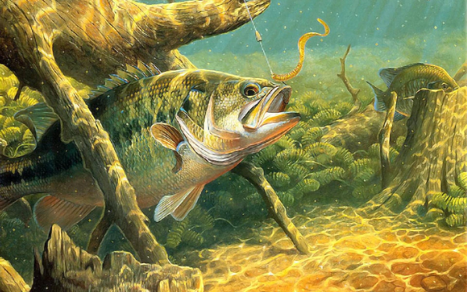 1920x1200 Bass Fishing Wallpaper HD