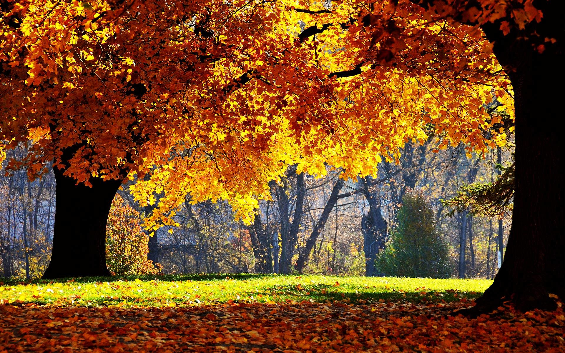 1920x1200 ... Autumn Wallpaper Hd Collection ...