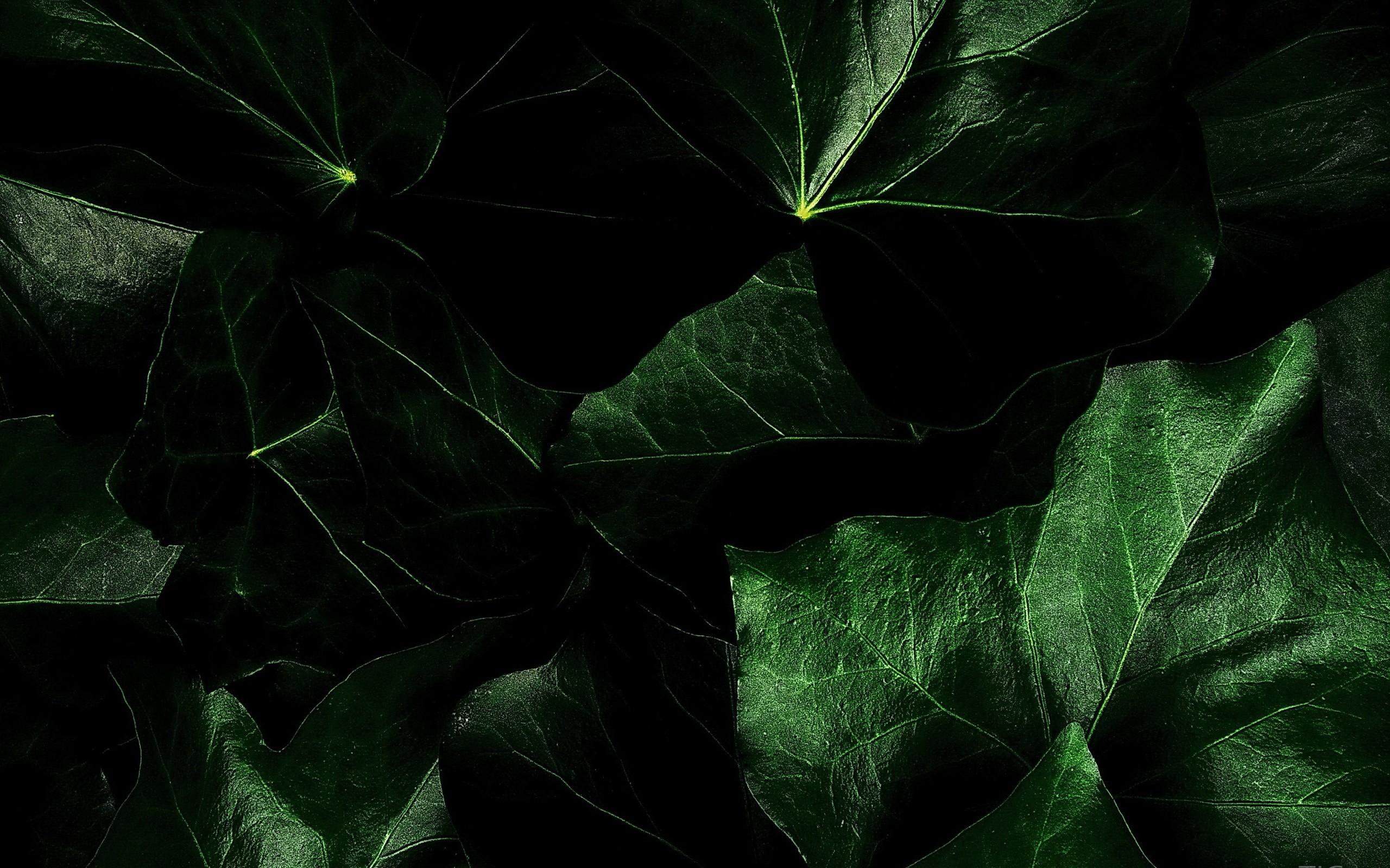 Dark Green Background Wallpaper (69+ images)