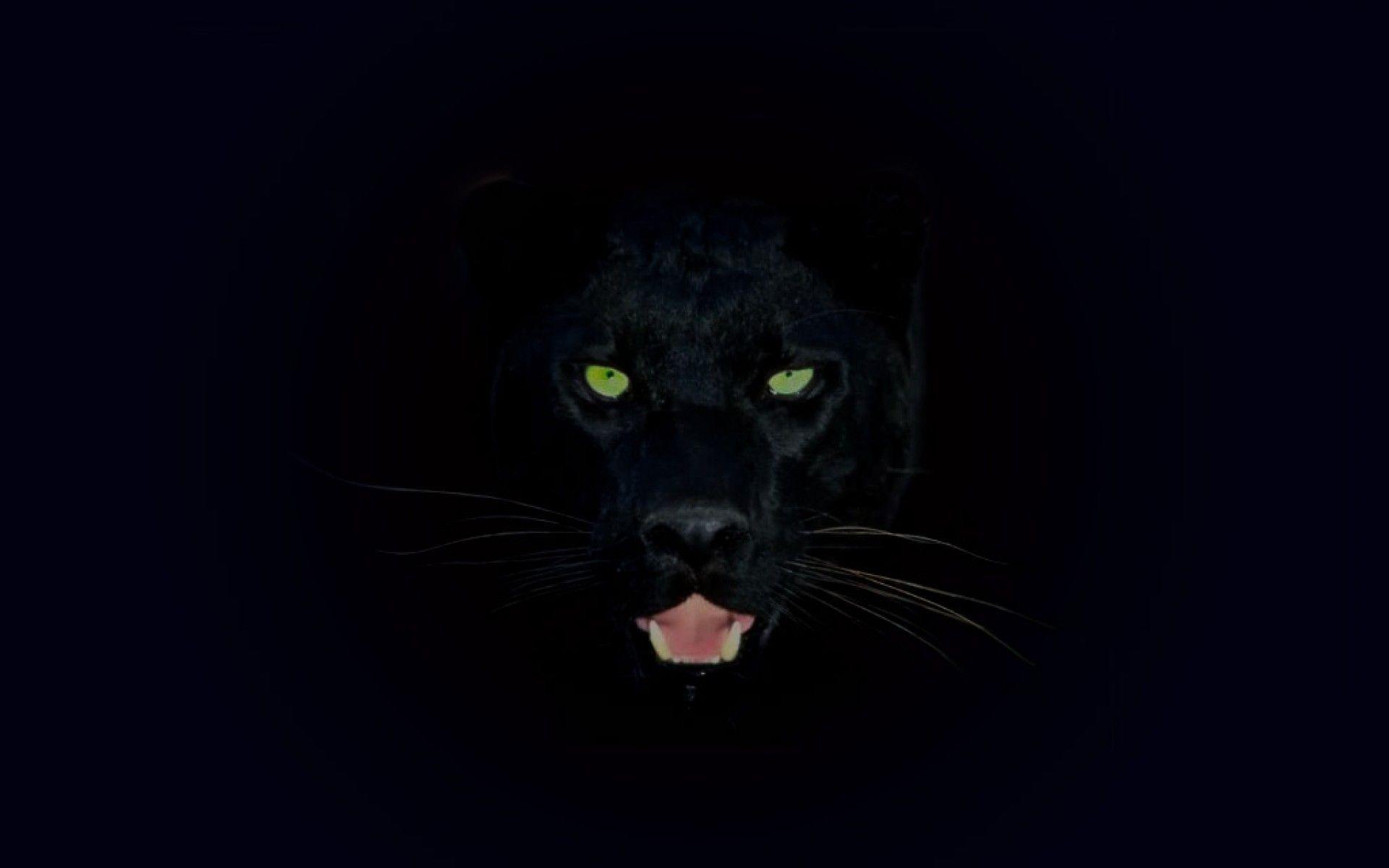 Black Wallpaper Jaguar