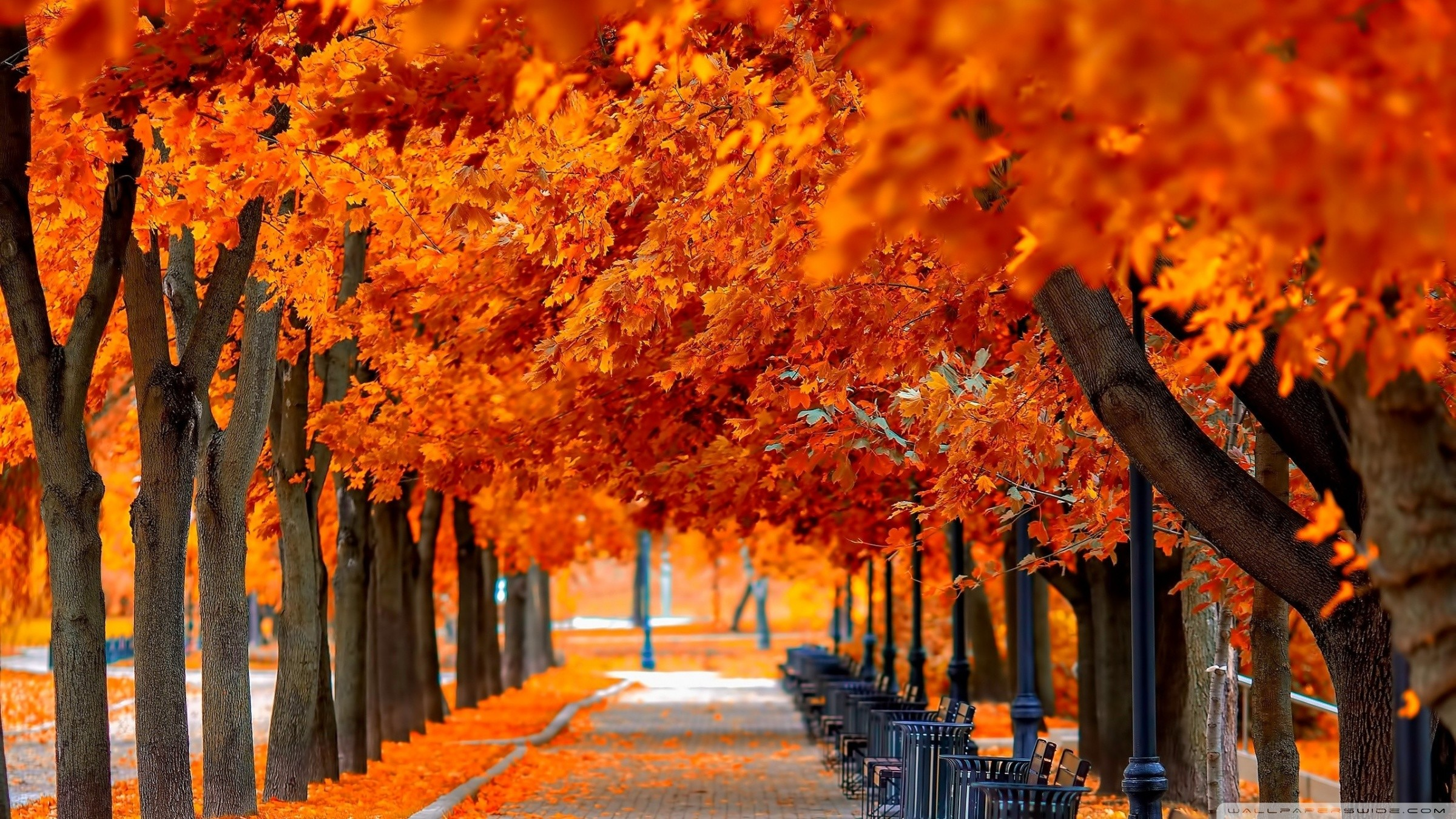 2400x1350 Wallpaper Fall nice hd wallpapers with red and orange colors