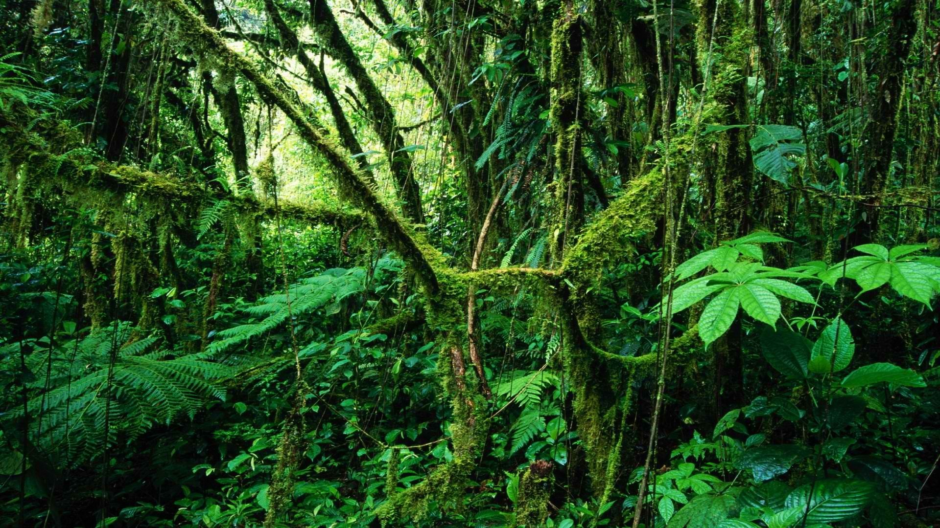 Rainforest Wallpaper (61+ Images