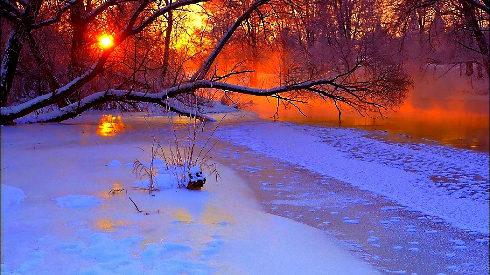 1920x1080 Preview wallpaper winter, sunset, evening, branches, tree, pond, cold,
