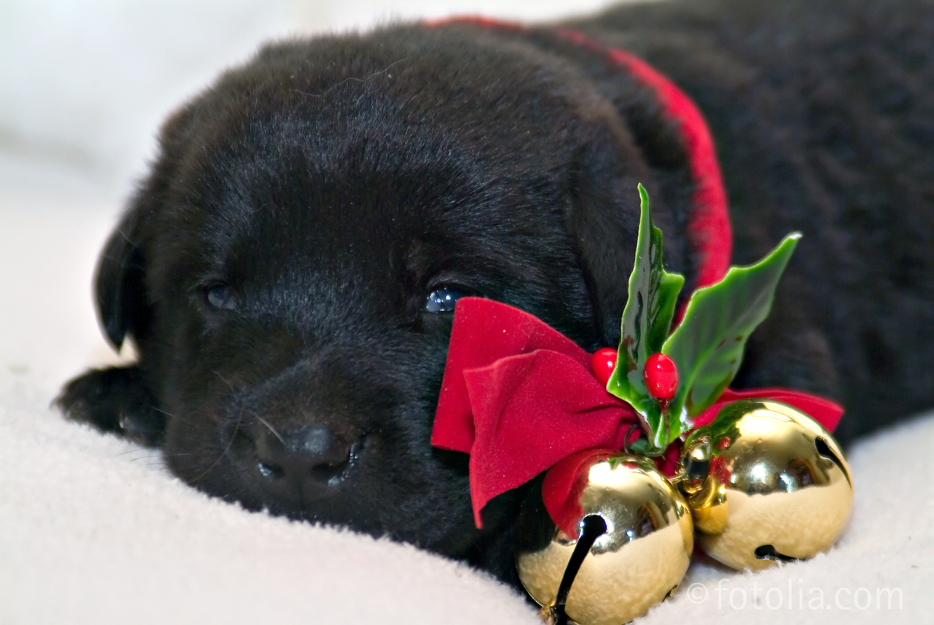 3024x2024 Christmas Puppy Wallpapers Phone