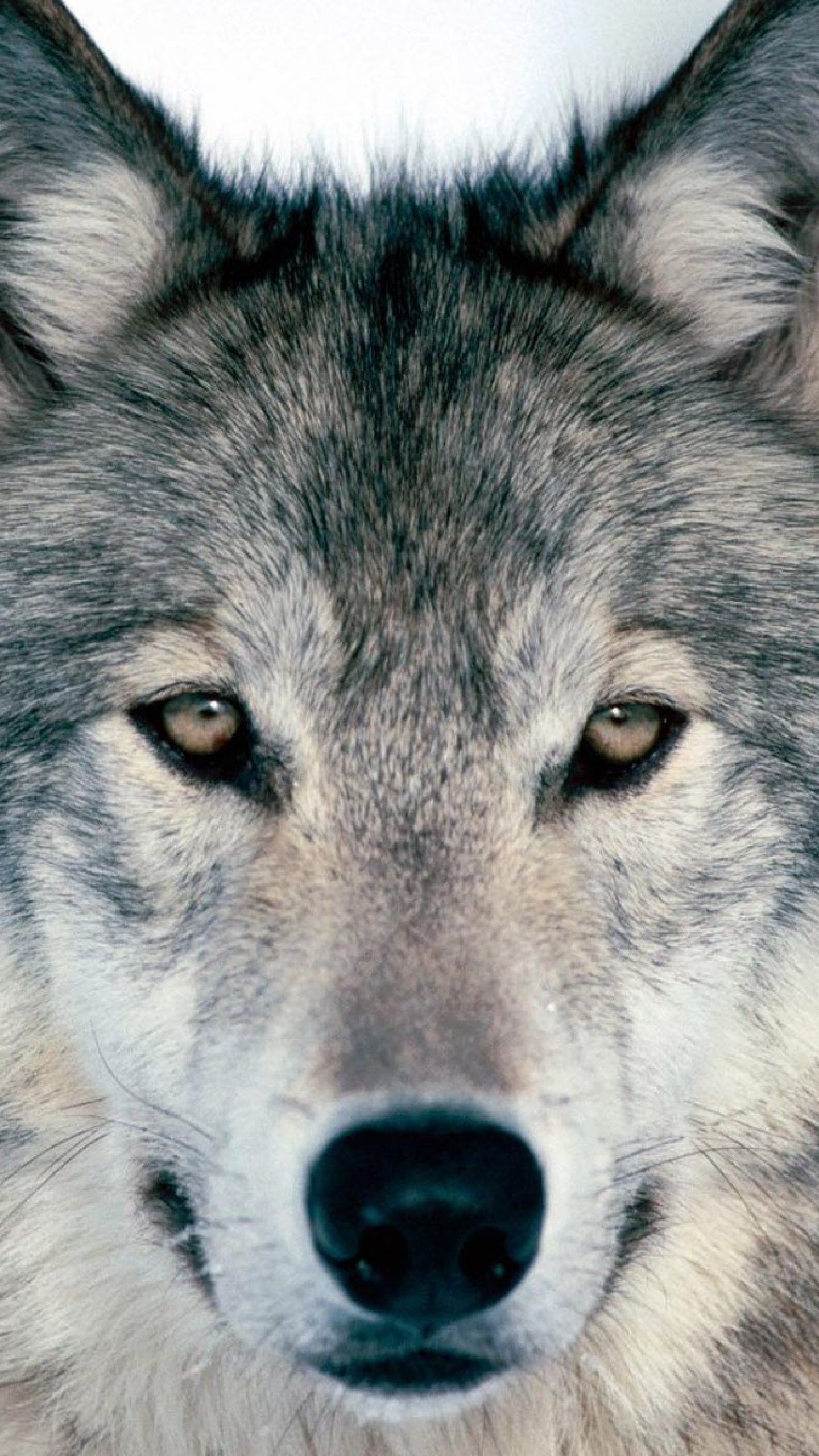 1440x2560 Preview wallpaper wolf, winter, snow, face, eyes, predator