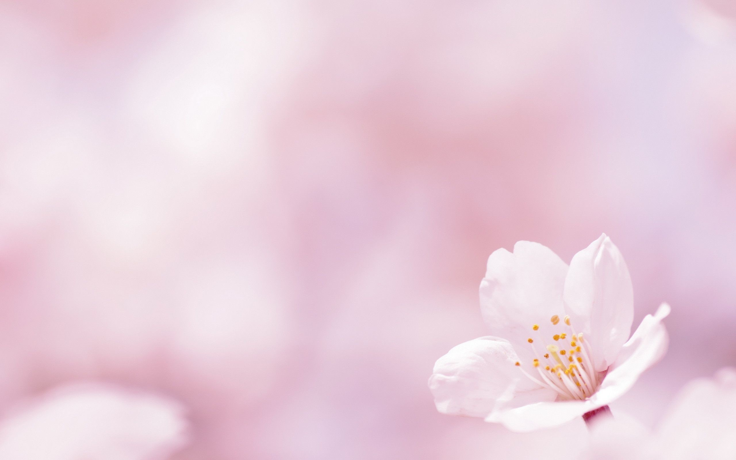 2560x1600 spring flower background 10
