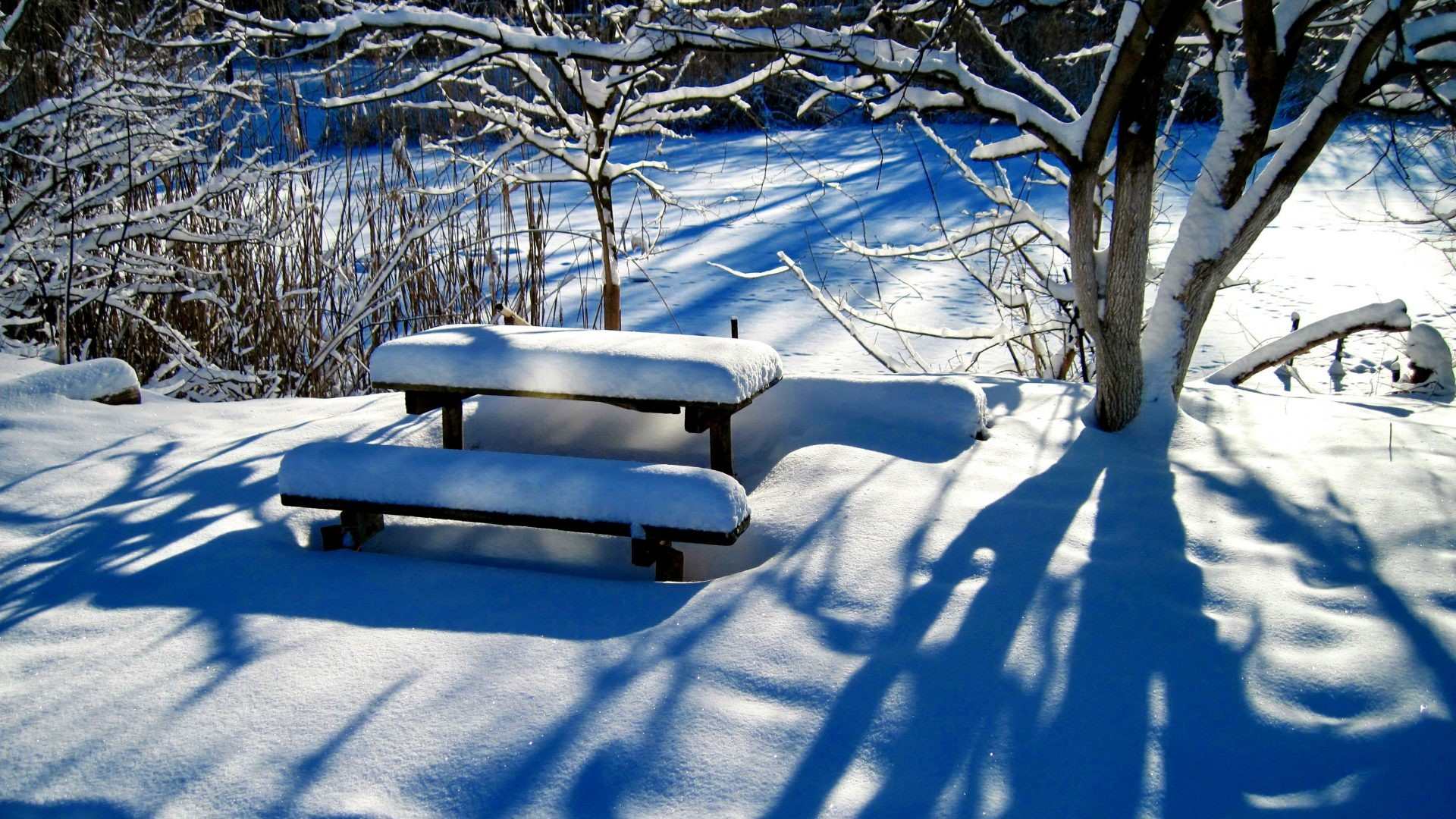 1920x1080 Winter Tag - Winter Sunny Quiet Trees Forest Rest Frost Lovely Bench  Shadows Beautiful Snow Park