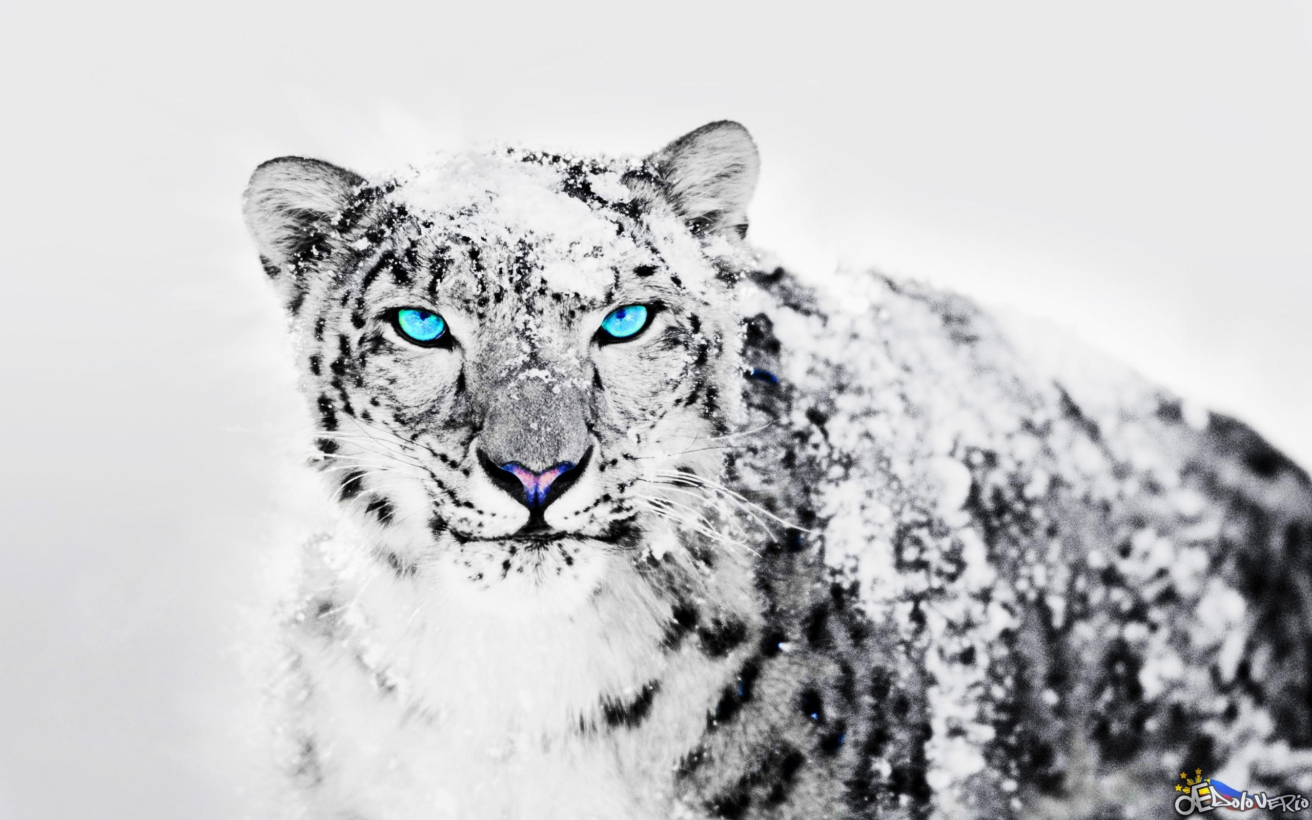 Black Leopard Wallpaper (71+ Images