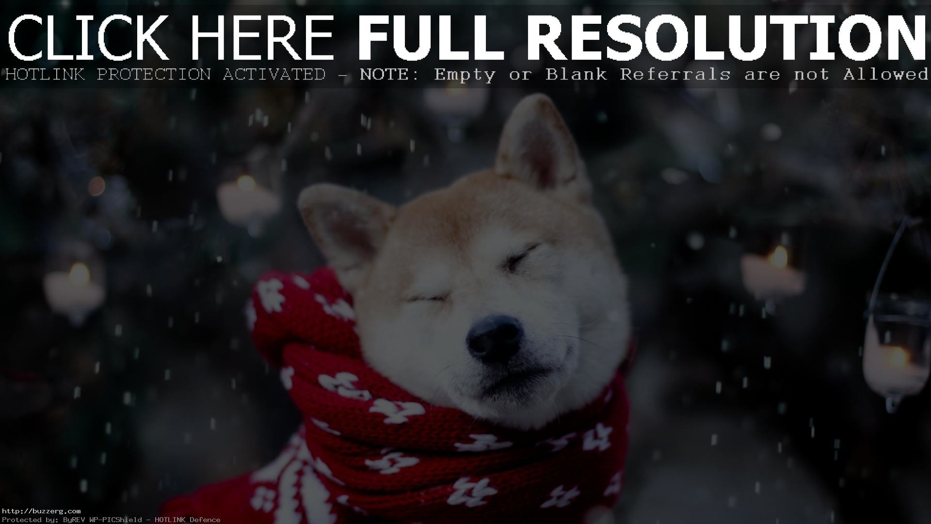 1920x1080 80 best images about Doge on Pinterest | The internet, Laughing .