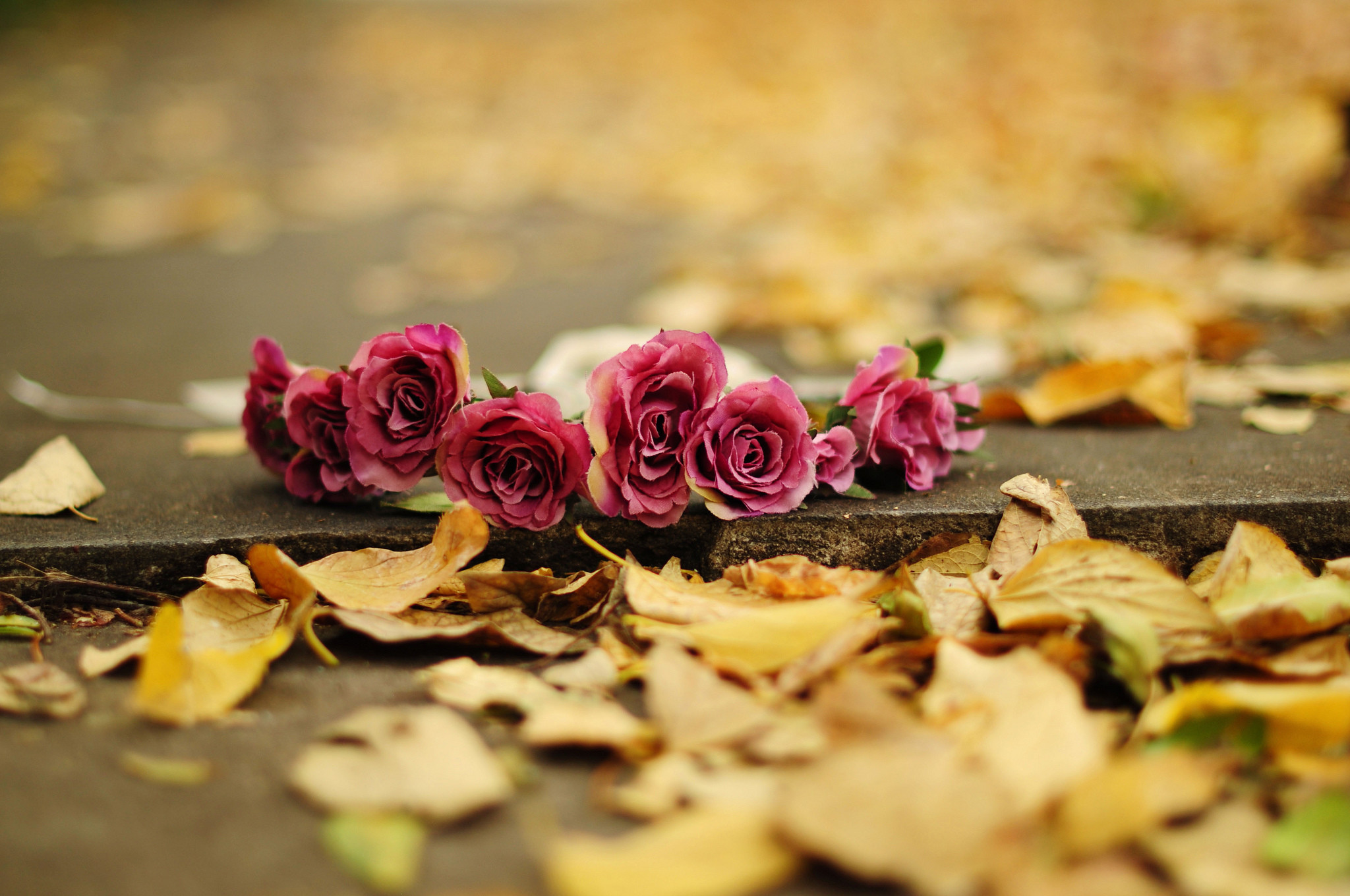 Fall Flowers Wallpaper (49+ images)
