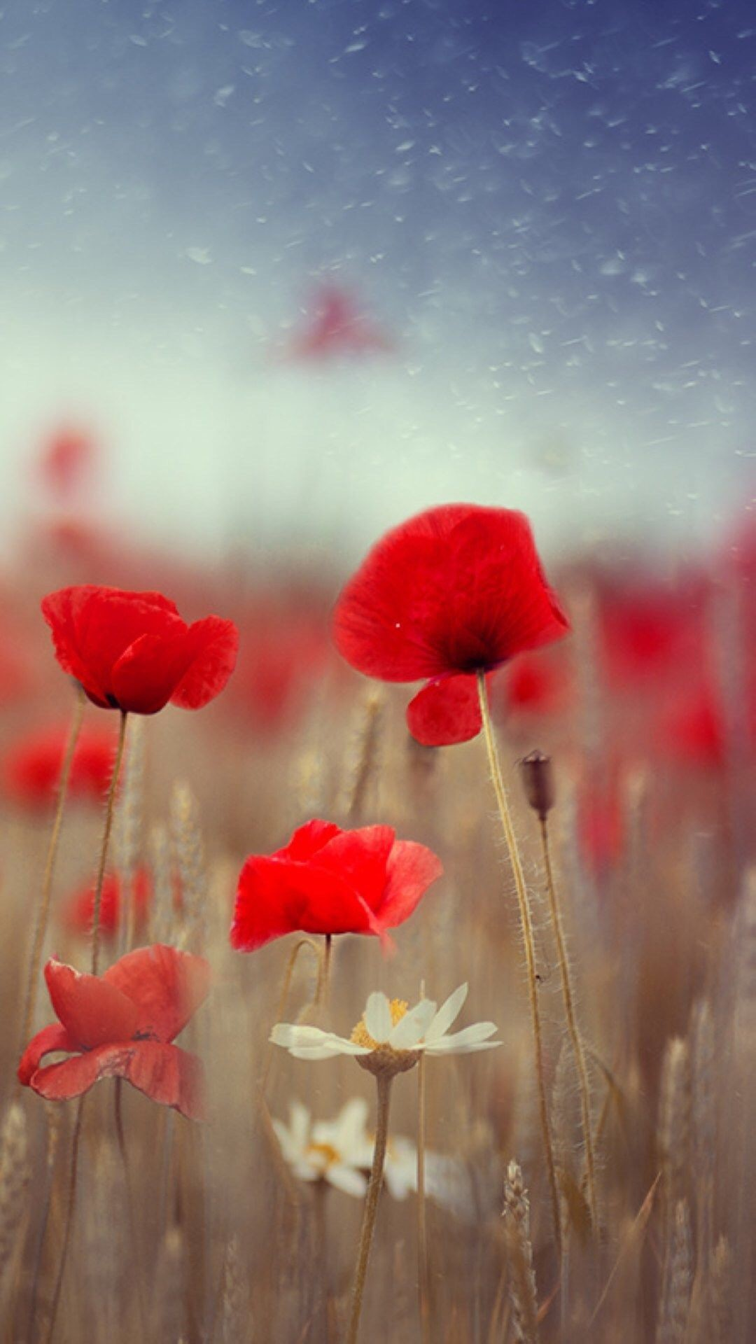 1080x1920 Fantasy Poppy Flower Field Plant Blur #iPhone #6 #wallpaper