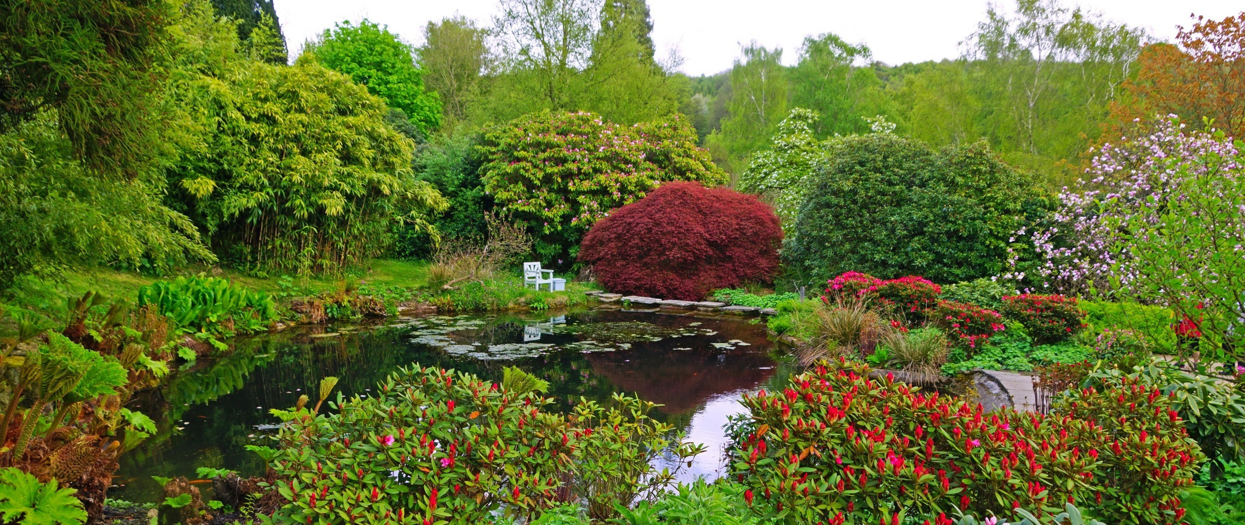 2560x1080 Flowers, Garden, England, Trees, Forest, Pond