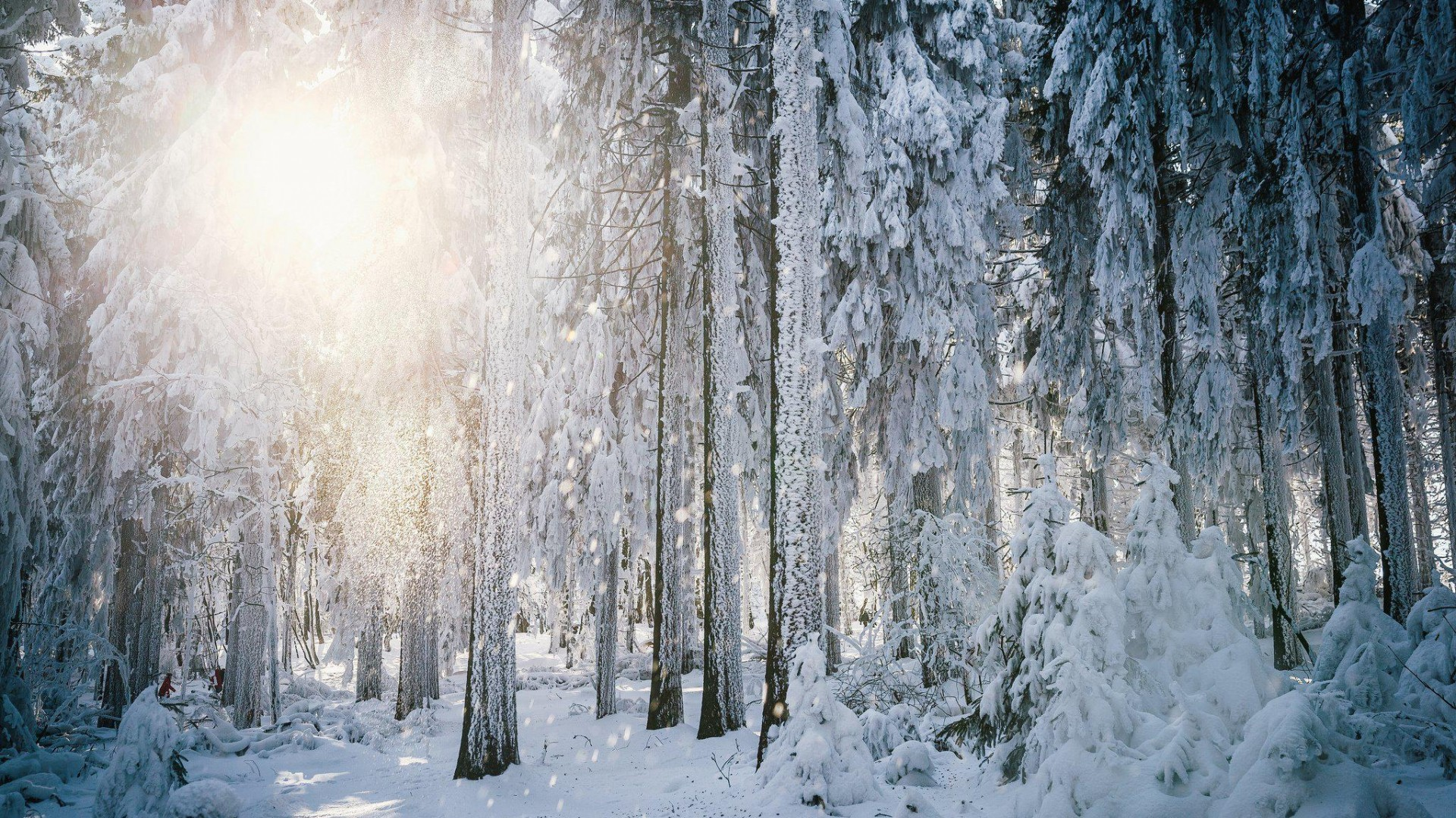 1920x1080 30 HD  Winter Backgrounds (Numbered)