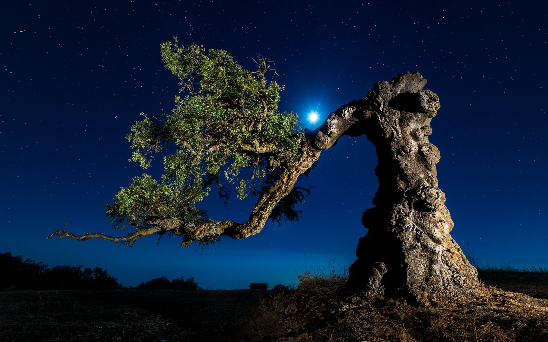 1920x1200 Twisted Tree Starry Night wallpapers and stock photos