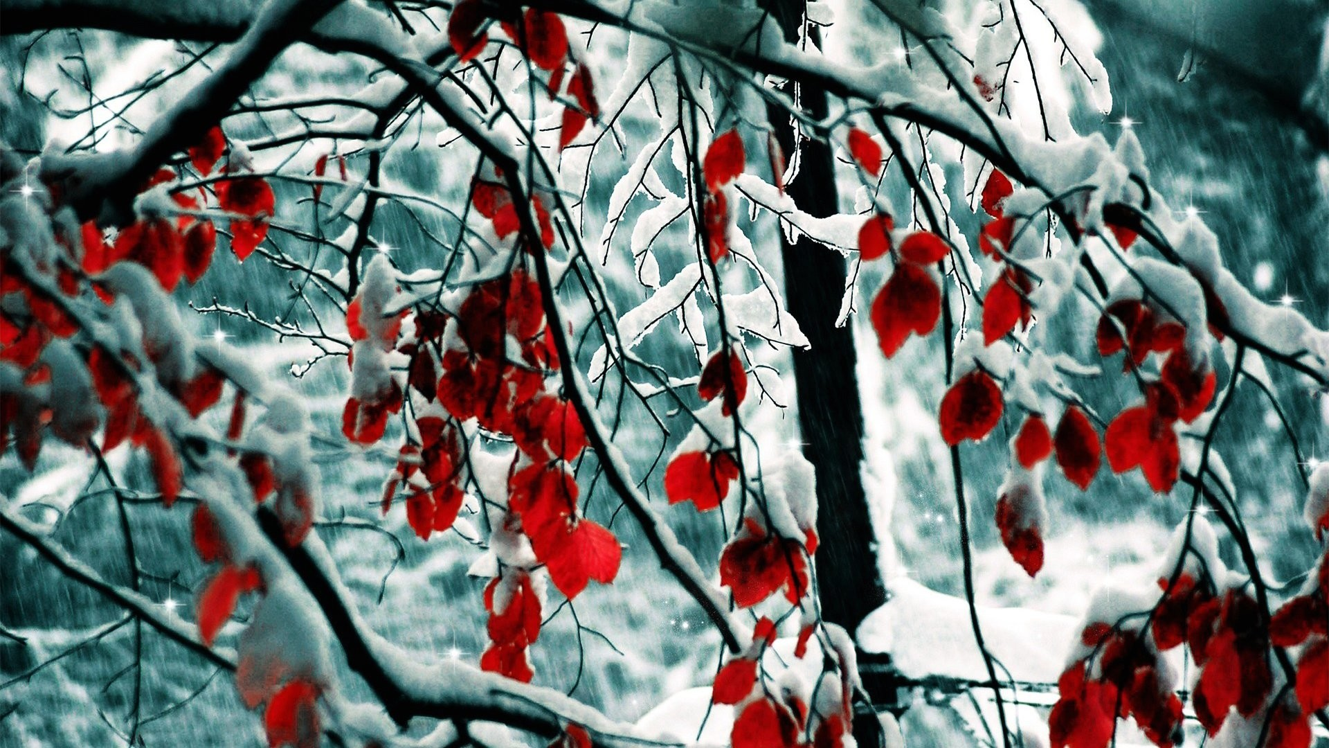 1920x1080 Wallpaper winter and red leaves 1920 x 1080 full hd