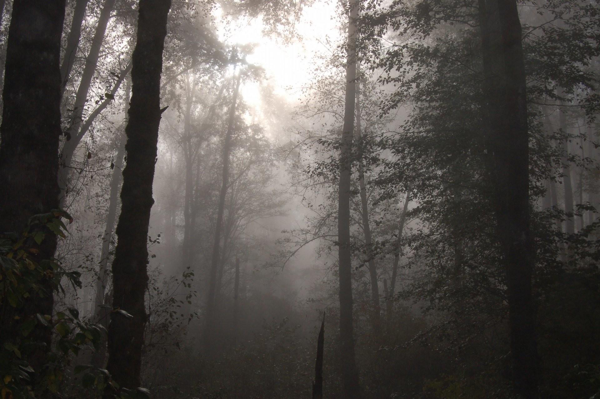 toxic fog lvler background
