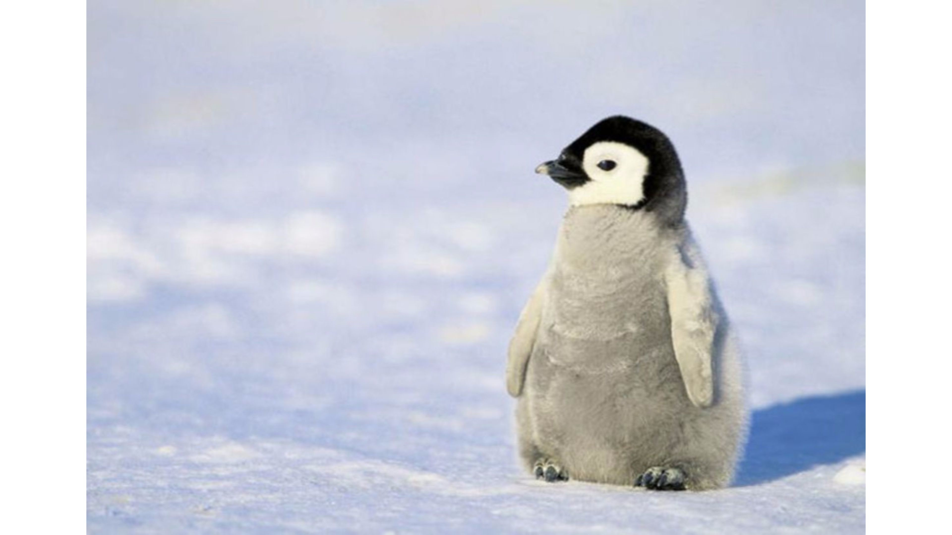 Cute Penguin Backgrounds 38 Images HD Wallpapers Download Free Images Wallpaper [1000image.com]