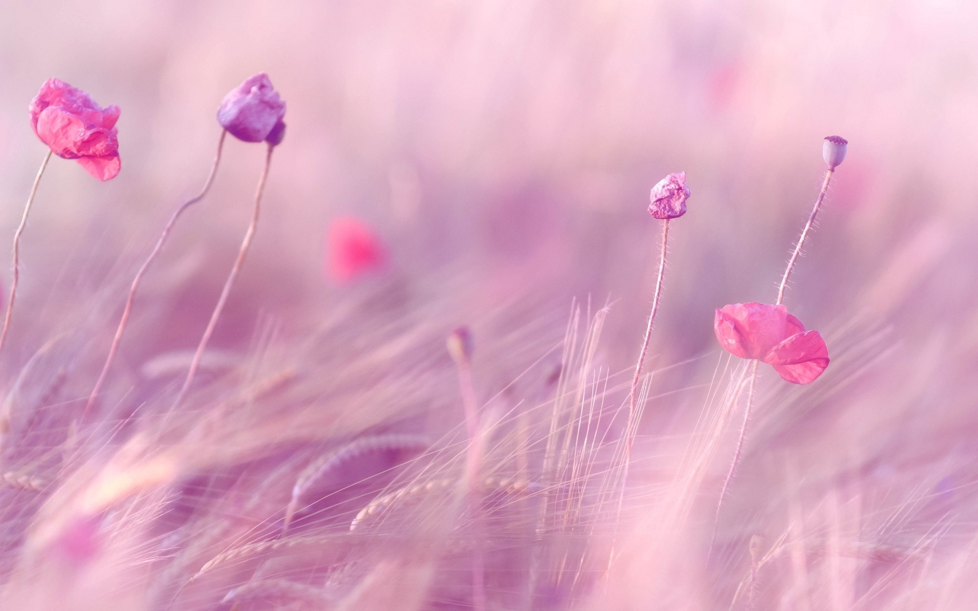 Pink background wallpaper hd