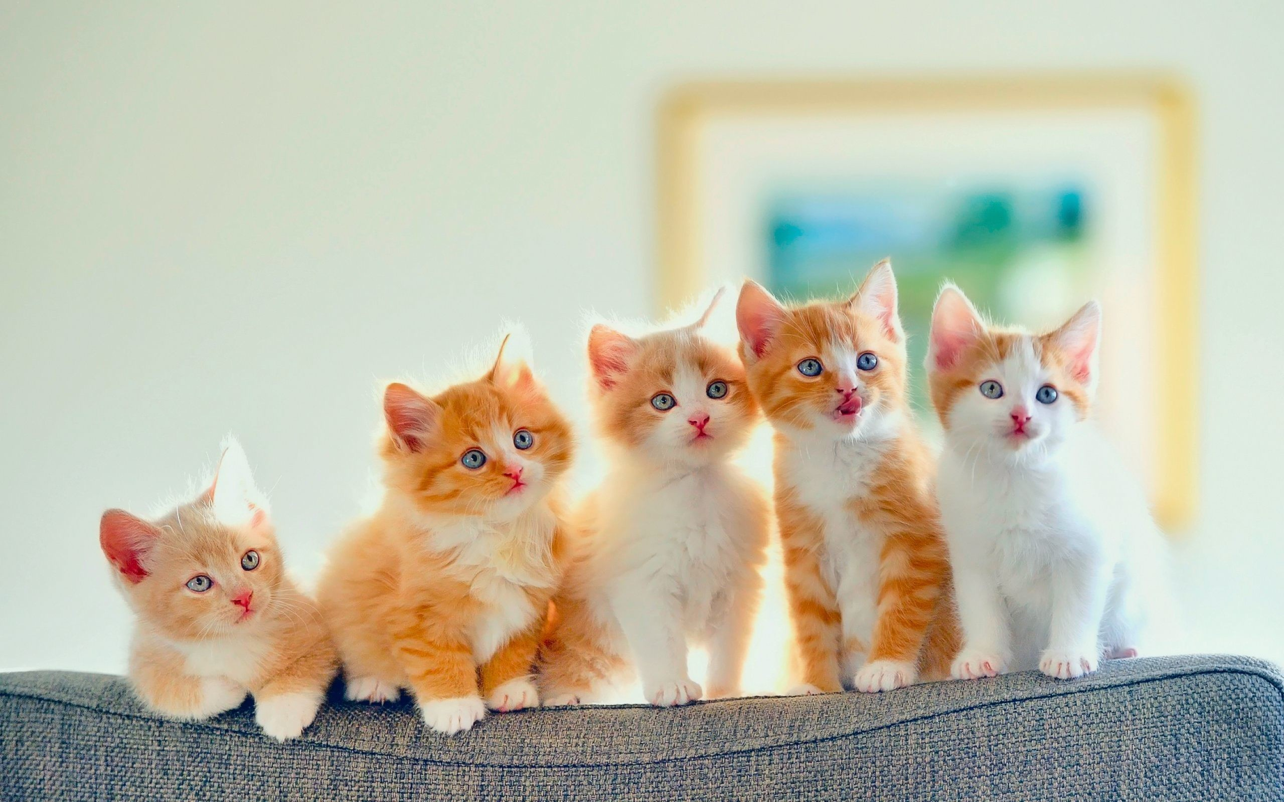 2560x1600 Orange Kitten Wallpaper
