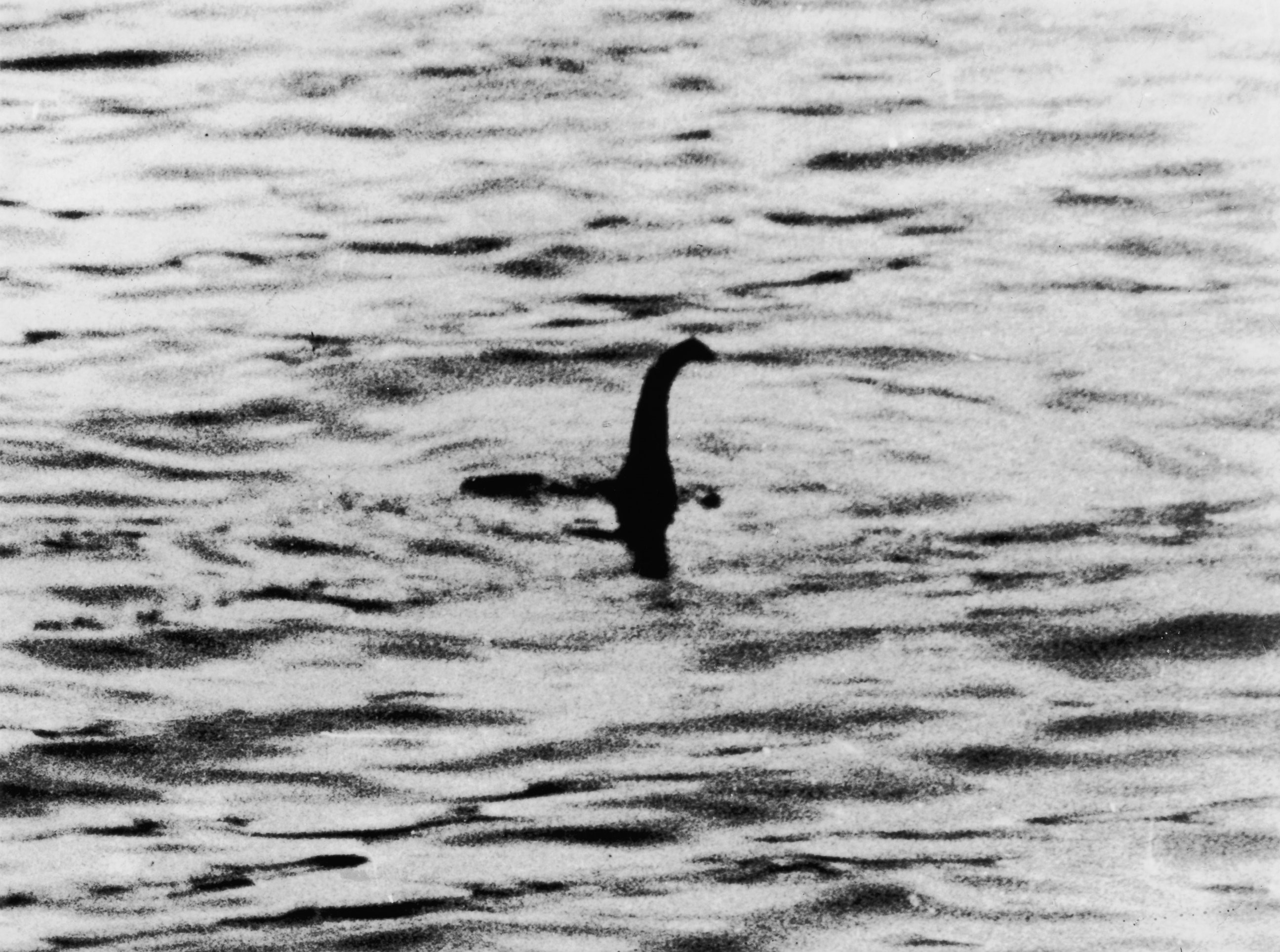 2592x1929 ... Loch Ness Monster. PHOTO: ...
