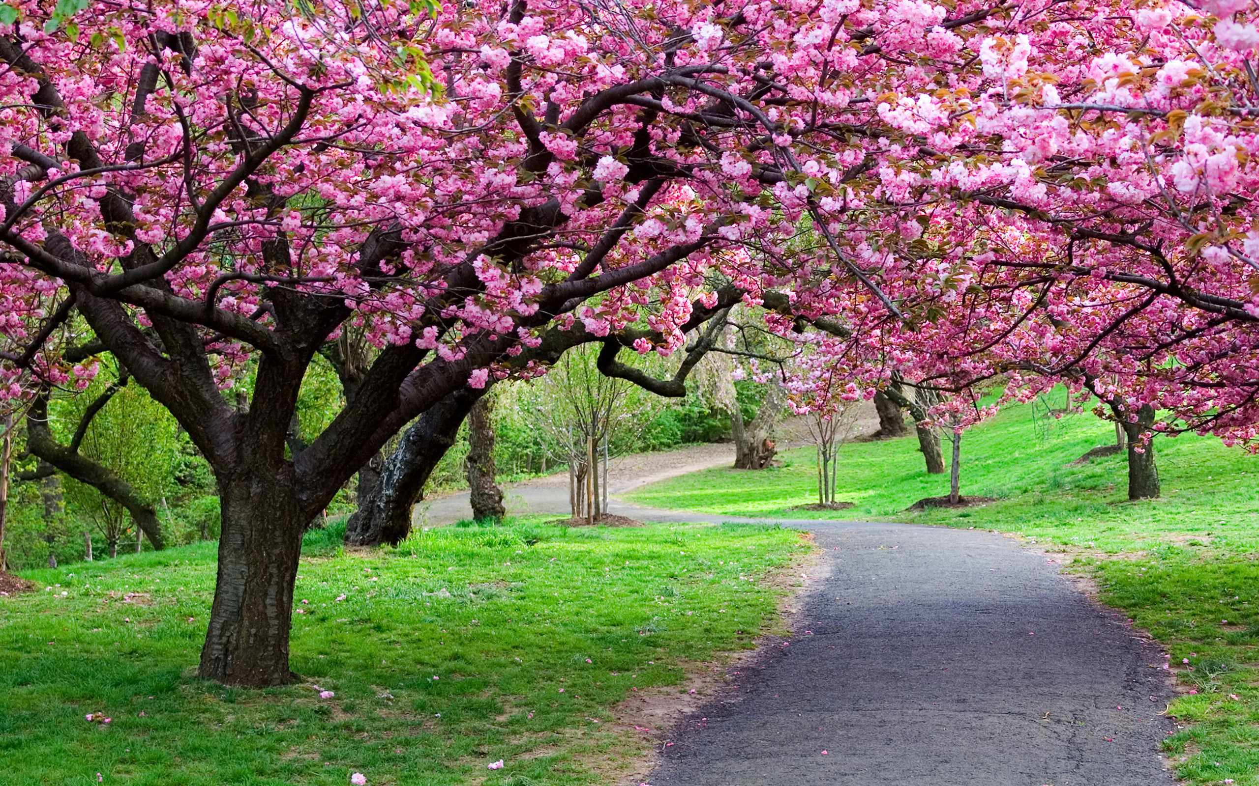 Spring Nature Wallpaper 60 Images