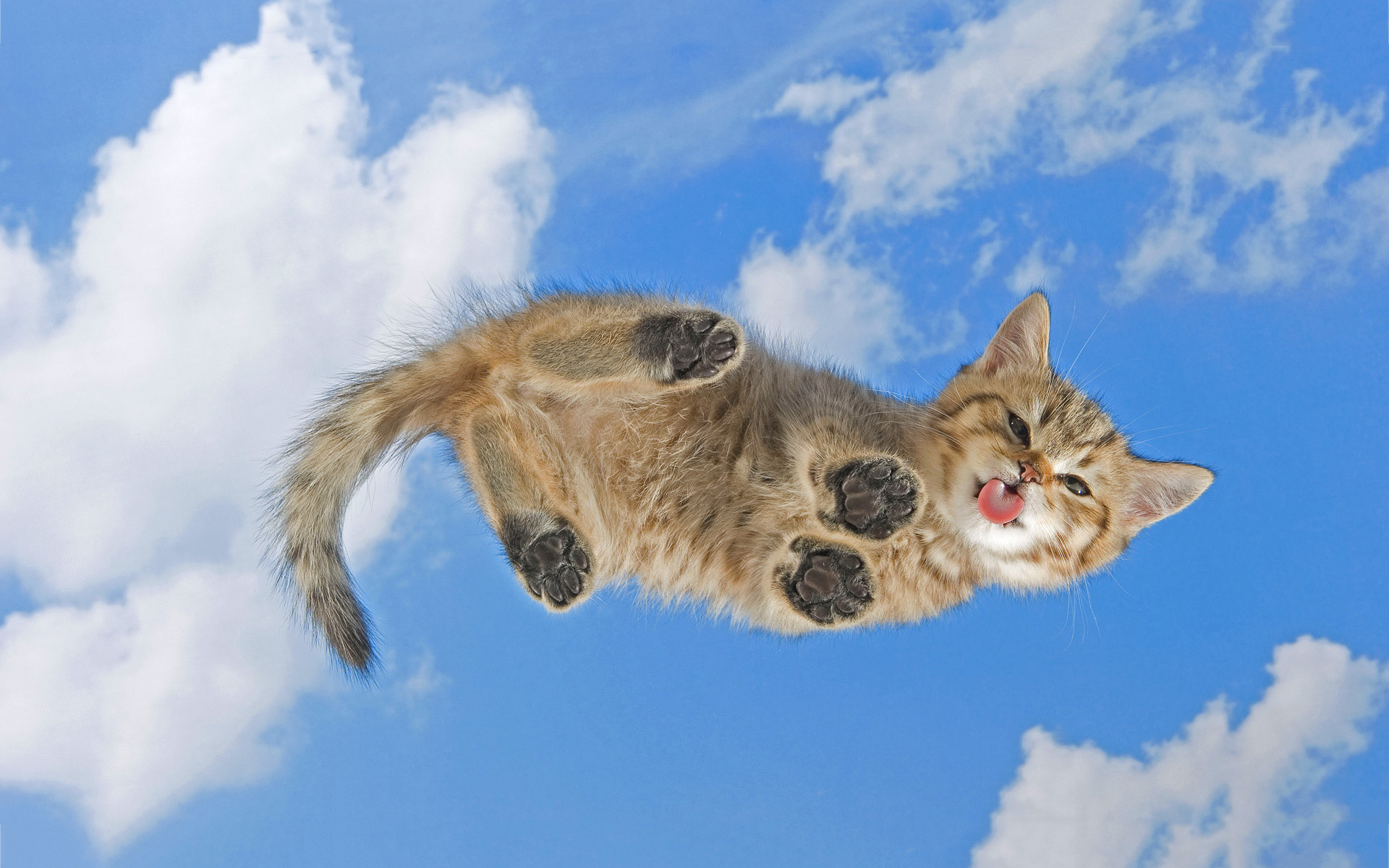 Cat Wallpapers And Screensavers 75 Images