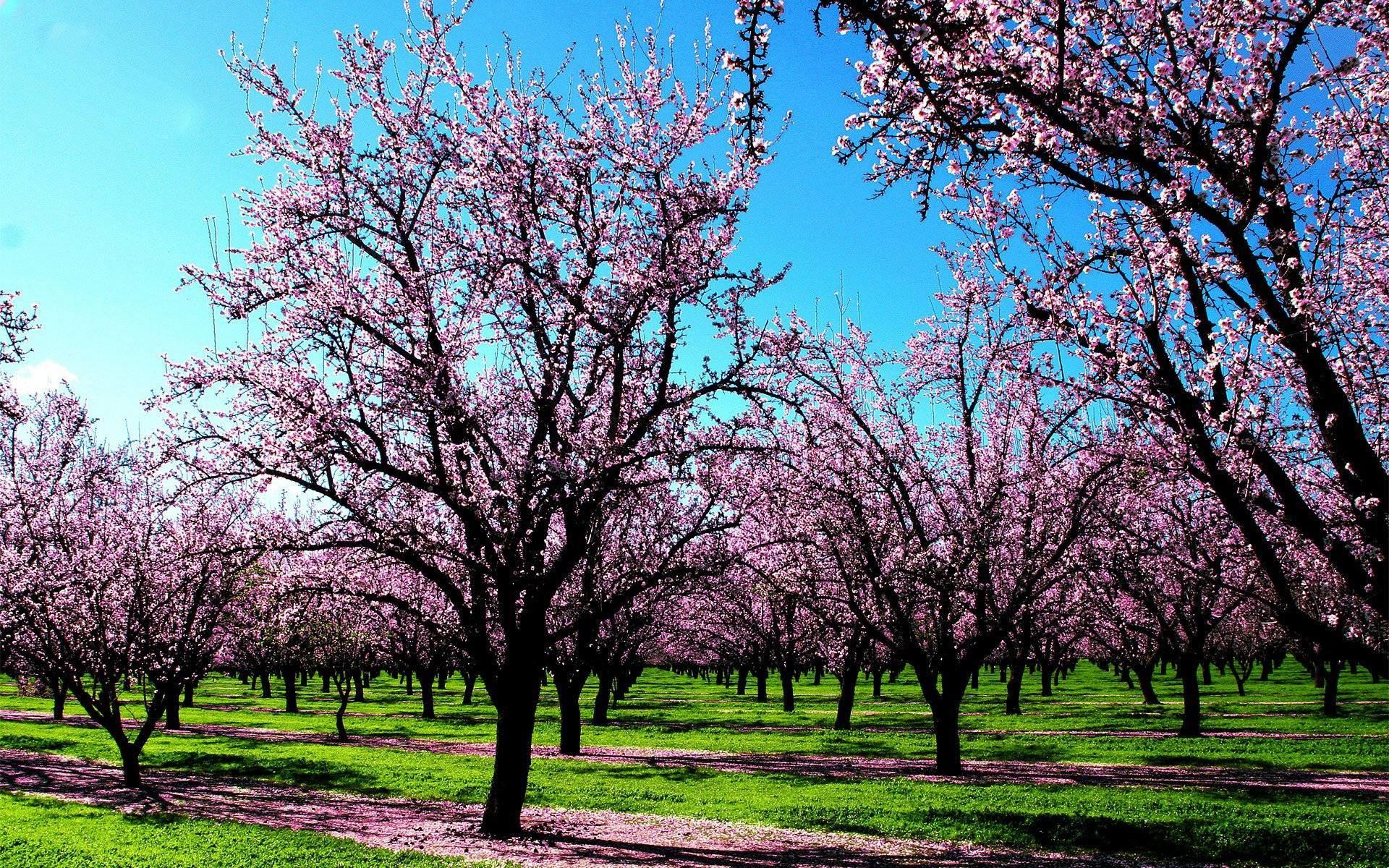 spring trees wallpaper