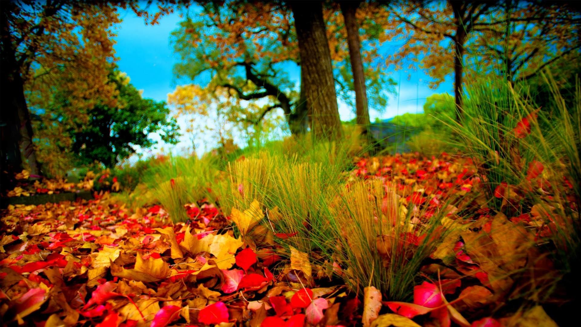Hd wallpaper nature 3d - 1920x1080 Hd Wallpapers 1080p Nature 3d