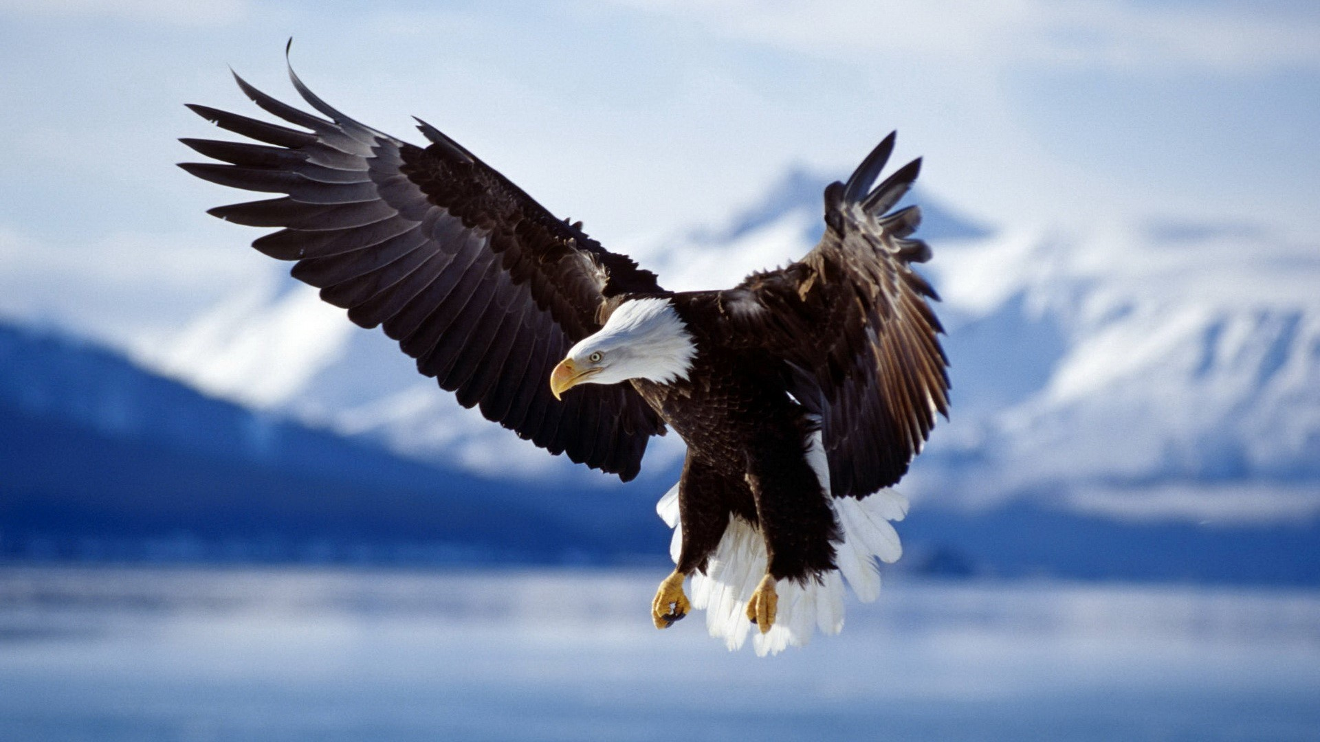 1920x1080 ... gallery free download also see Bald Eagle Picture, Bald Eagle Desktop  Wallpaper find here eagle bird photos Backgrounds hd wallpapers free  download see ...