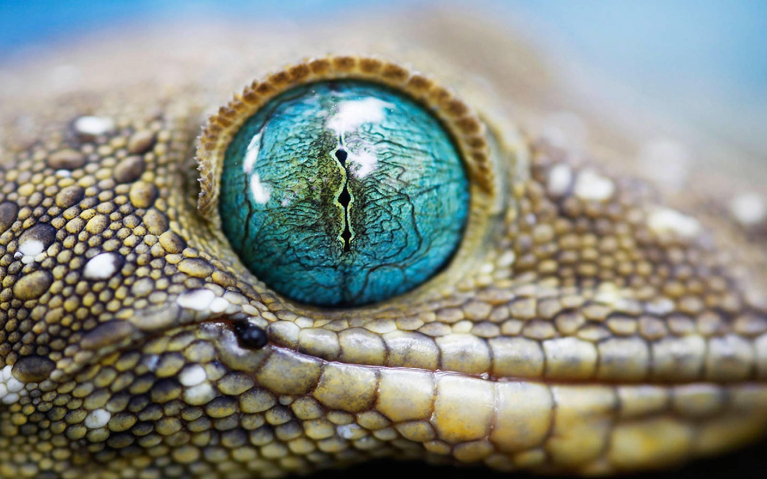 Beautiful Wallpaper Marvel Lizard - 1044328-beautiful-lizard-wallpaper-2560x1600  You Should Have_113615.jpg