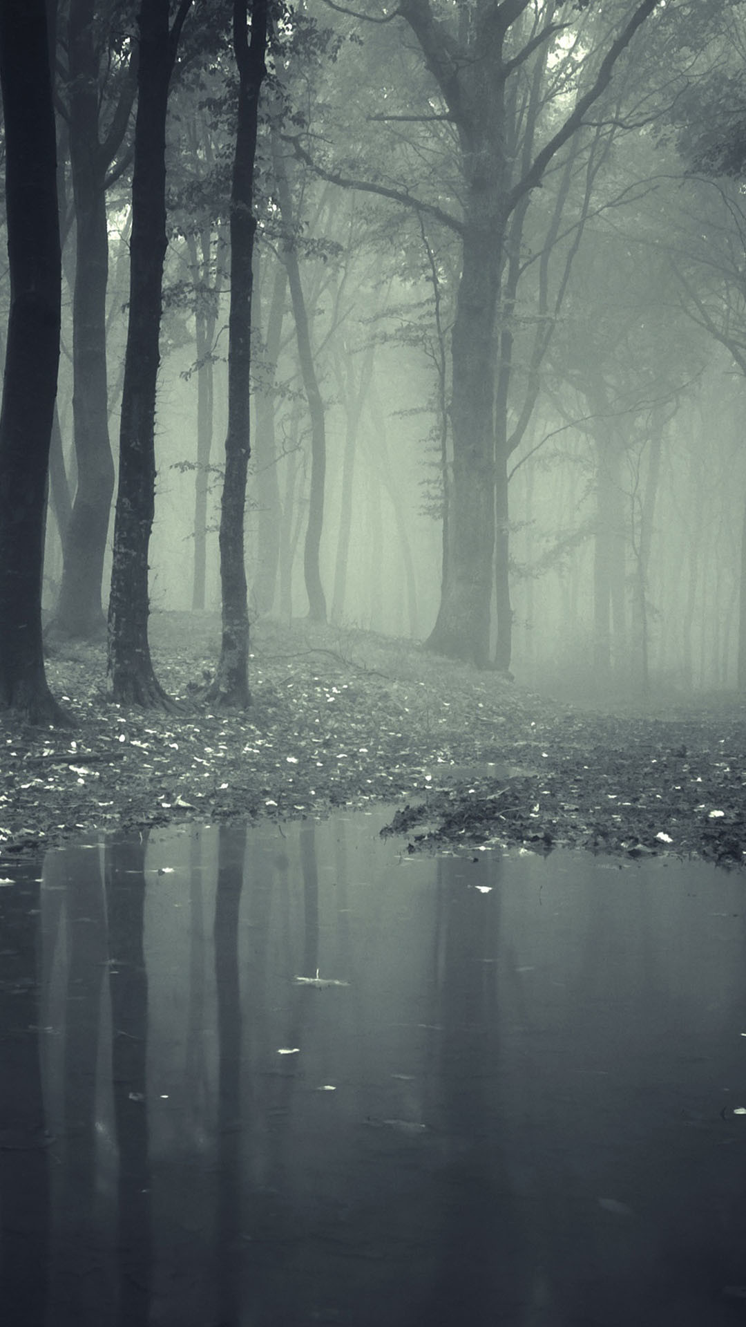 Dark Forest iPhone Wallpaper (74+ images)