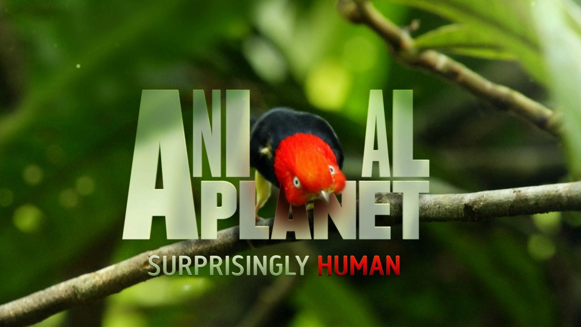 Aninimal Book: Animal Planet Wallpaper (65+ images)