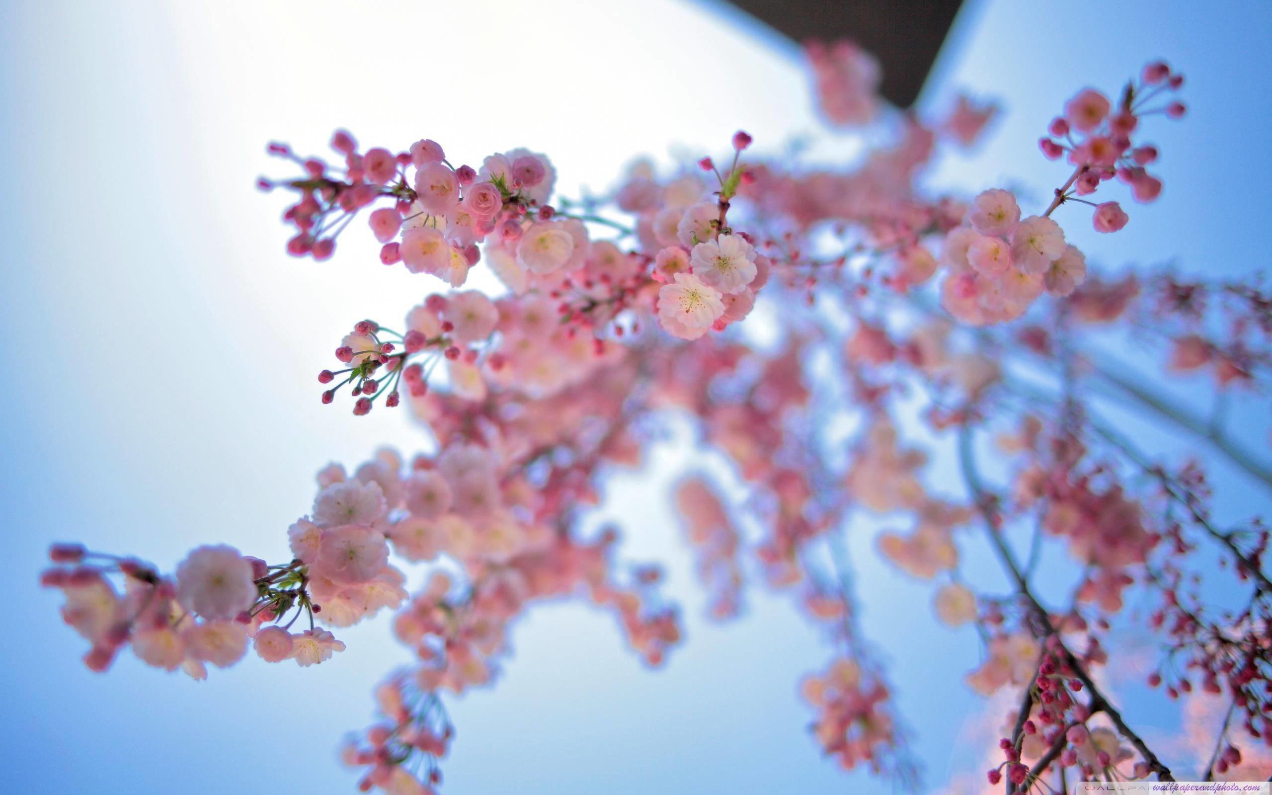 Spring Desktop Wallpaper Widescreen (56+ images)