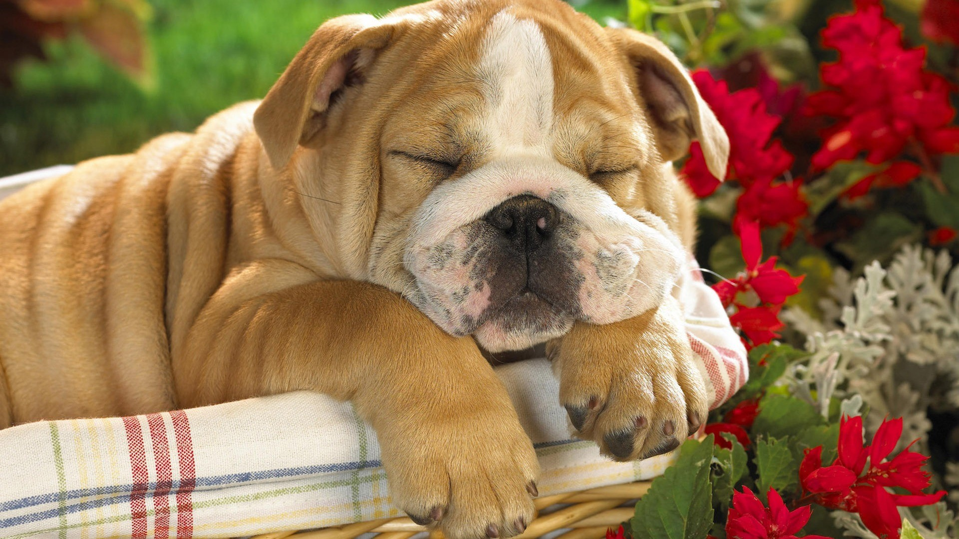 Cute Dog Wallpapers (64+ images)