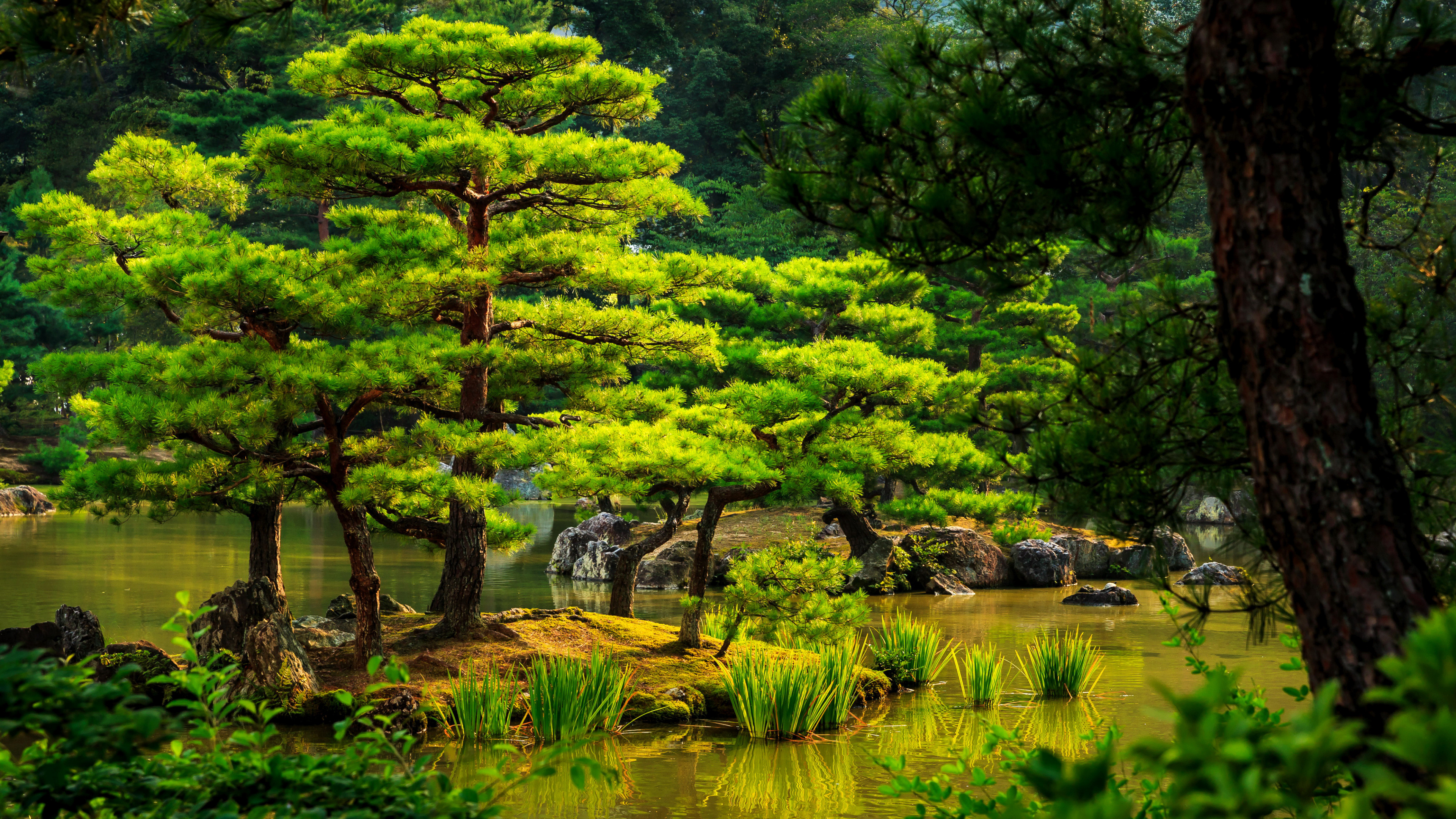 3840x2160 Water, Nature Reserve, Botanical Garden, Japanese Garden, Bog Wallpaper in   Resolution