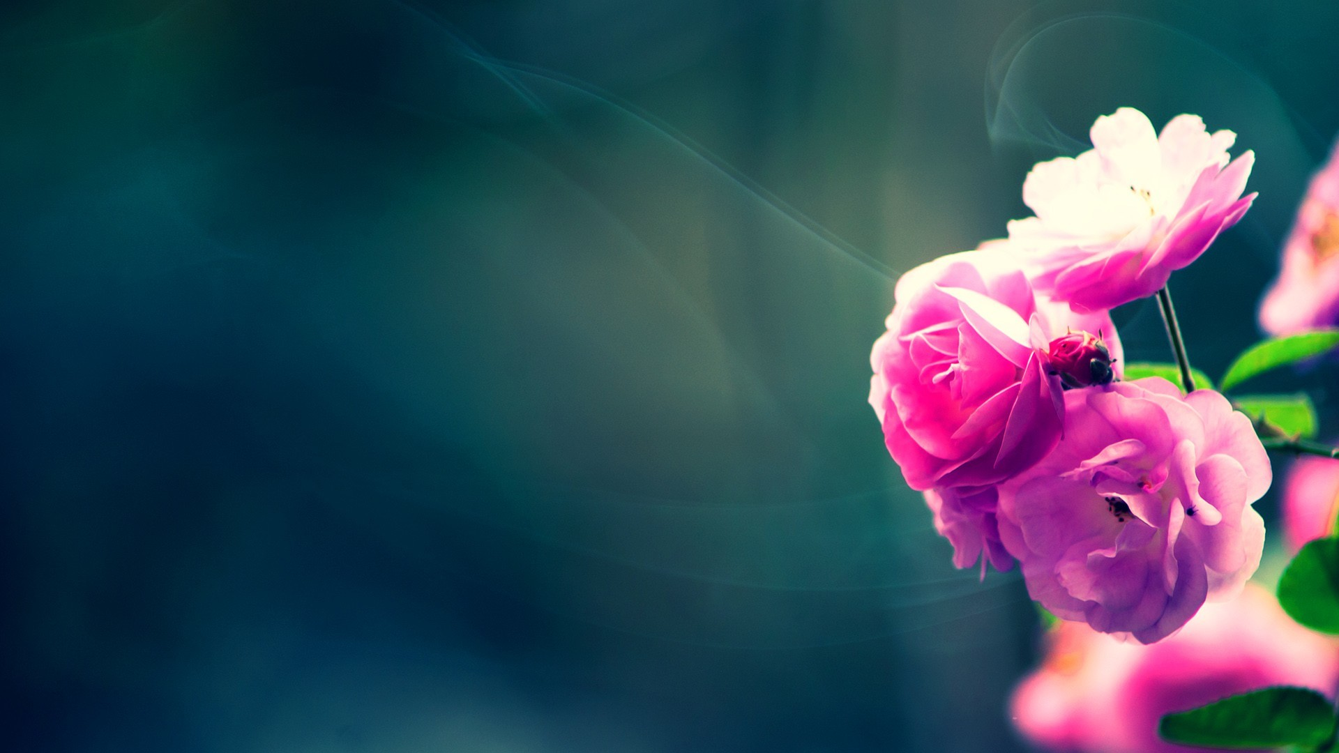 1920x1080 Flower Wallpaper Widescreen Pic12fc Background