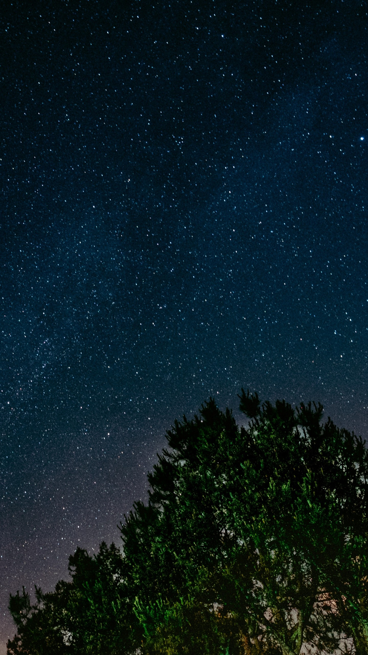 1440x2560  Wallpaper starry sky, tree, night