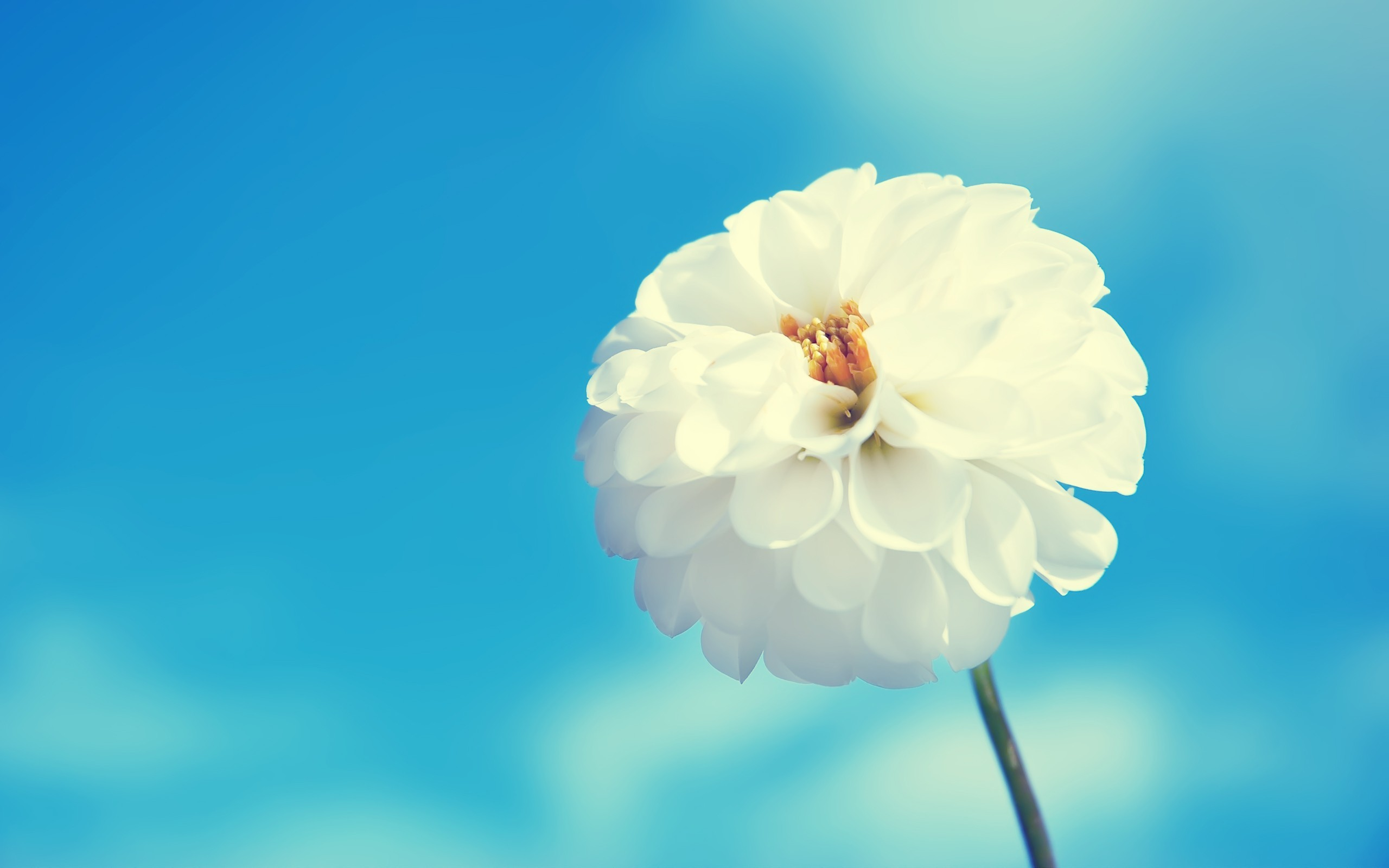 2560x1600 White Flower And Blue Sky 2560 x 1600 340x220