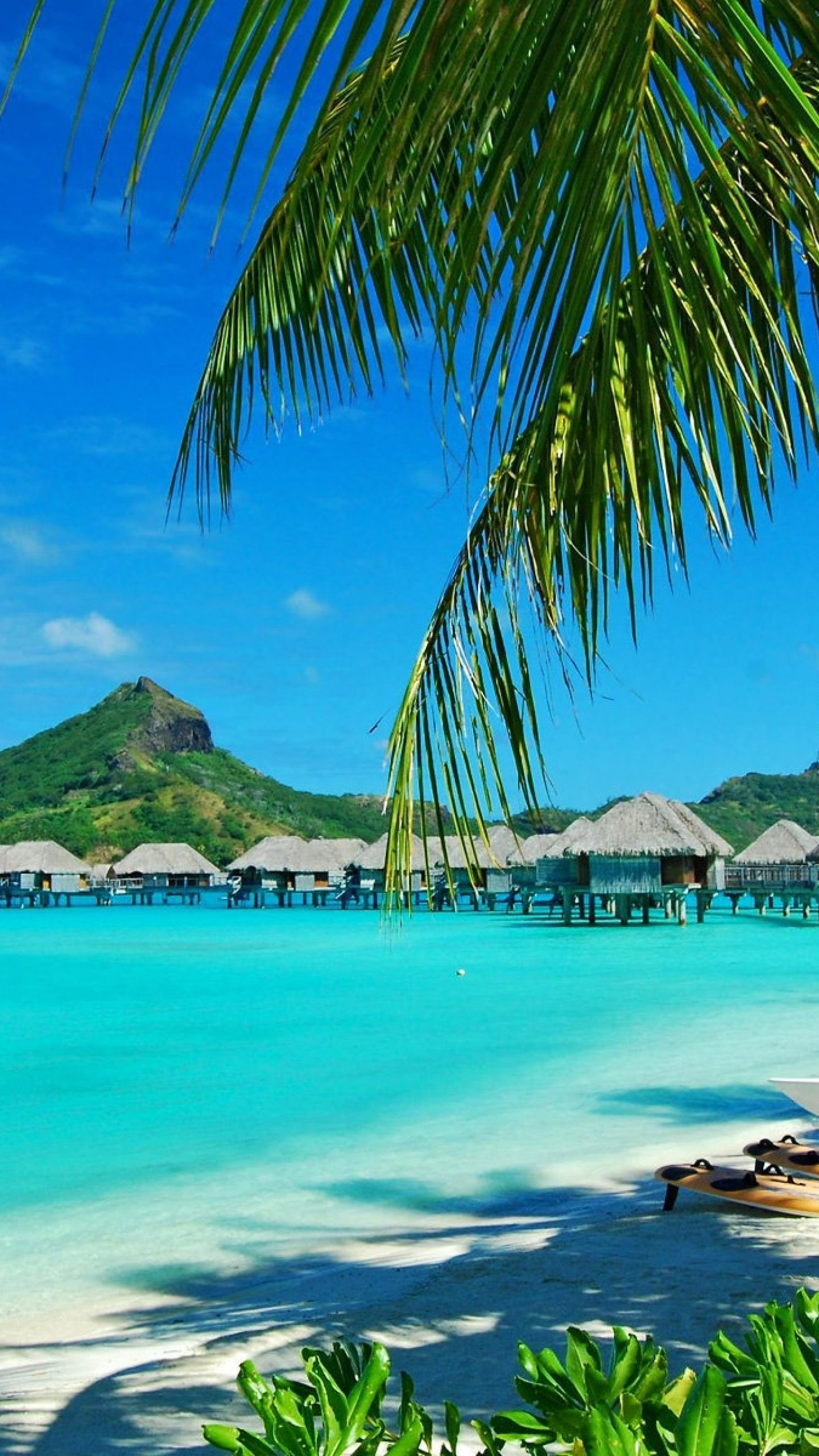 1440x2560 Preview wallpaper hawaii, coast, resort, rest, palm trees, lagoon, blue