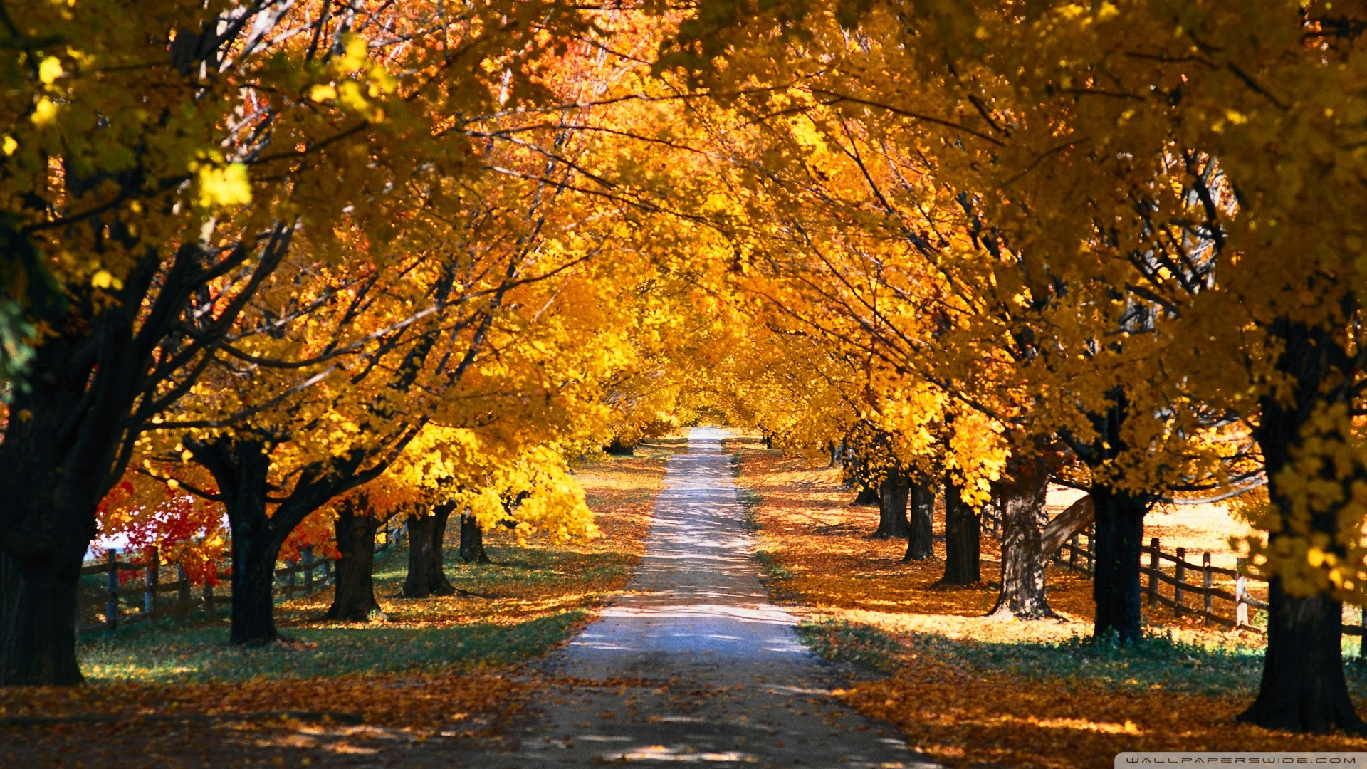 1920x1080 Tree Tunnel Road Autumn HD desktop wallpaper : High Definition 1024×768  Wallpaper Tree (43 Wallpapers) | Adorable Wallpapers | Desktop | Pinterest  | Tree ...