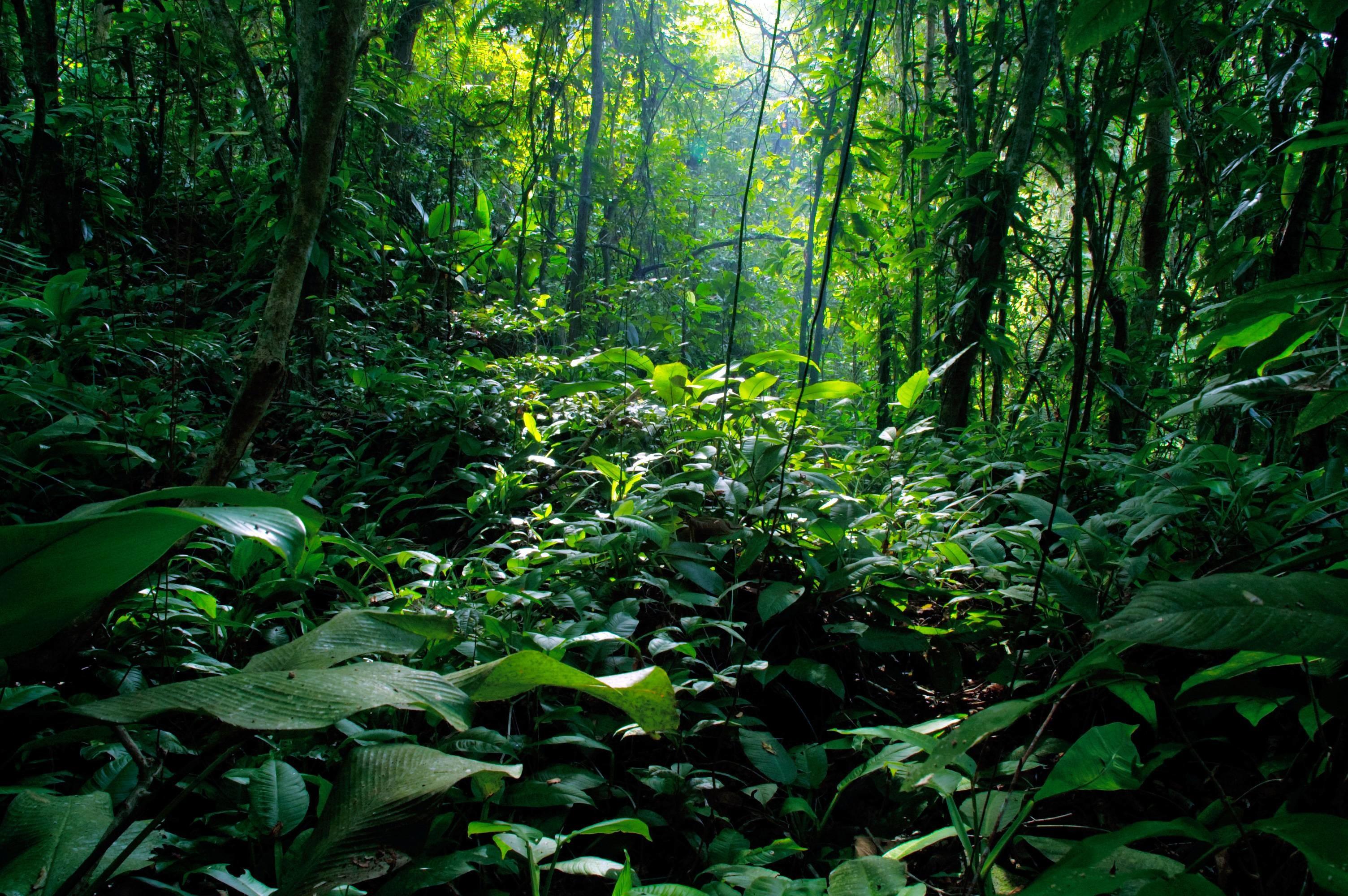 Rainforest Backgrounds (60+ images)