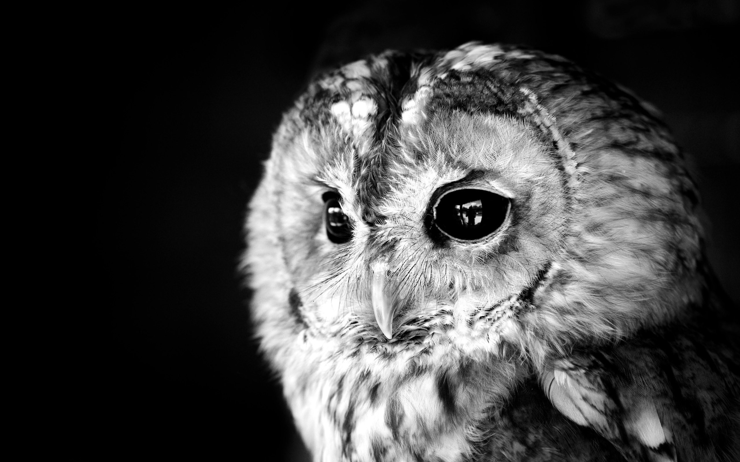 2560x1600 ... owl HD Wallpaper