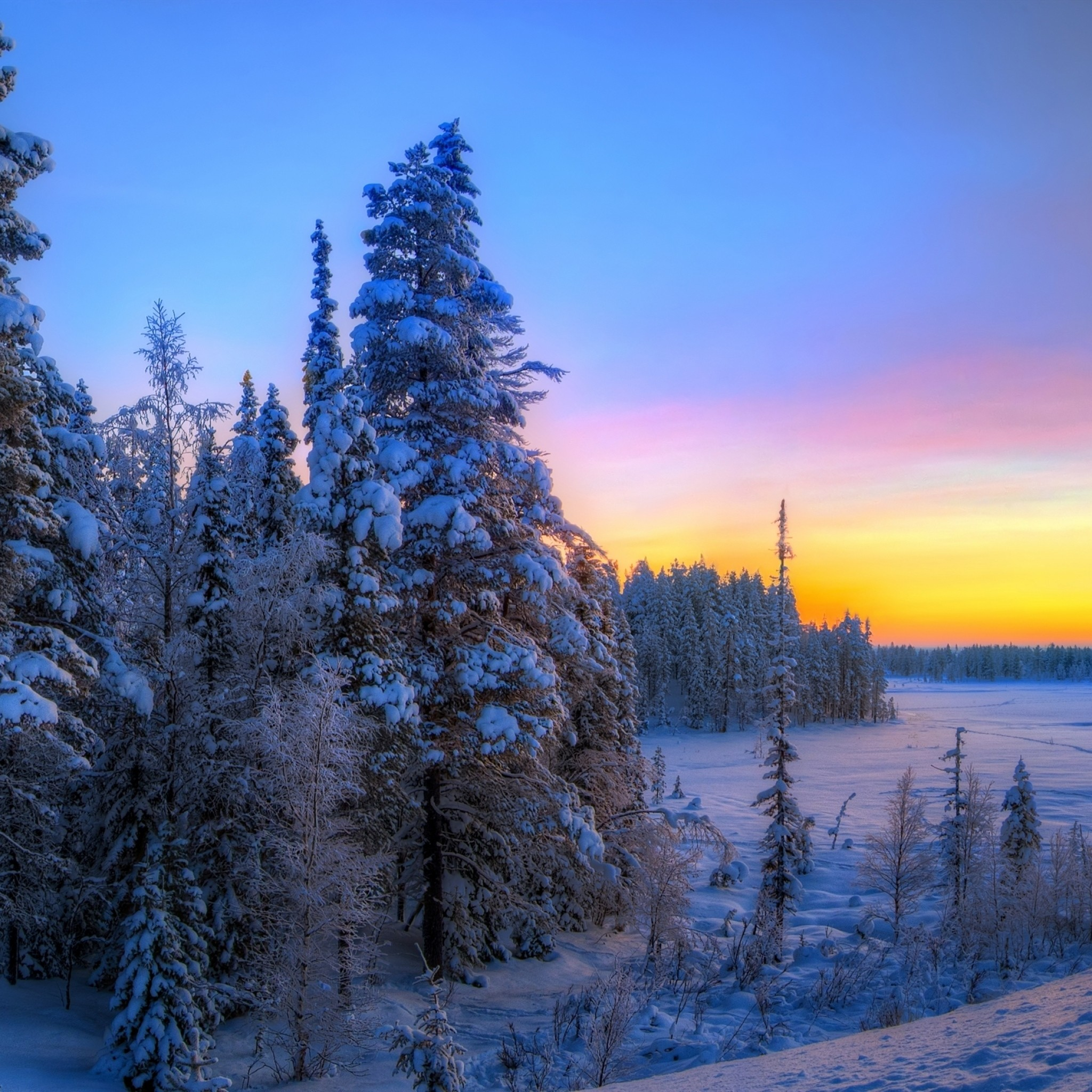 2048x2048 Preview wallpaper sunset, winter, trees, landscape