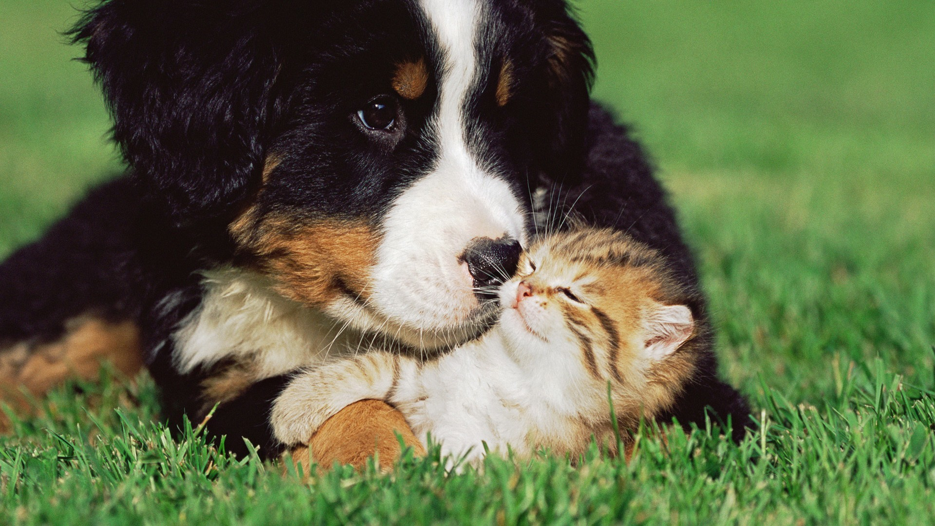 2560x1600 Desktop Search Images Of Dogs Wallpaper Download 1920x1200 Cute Puppy