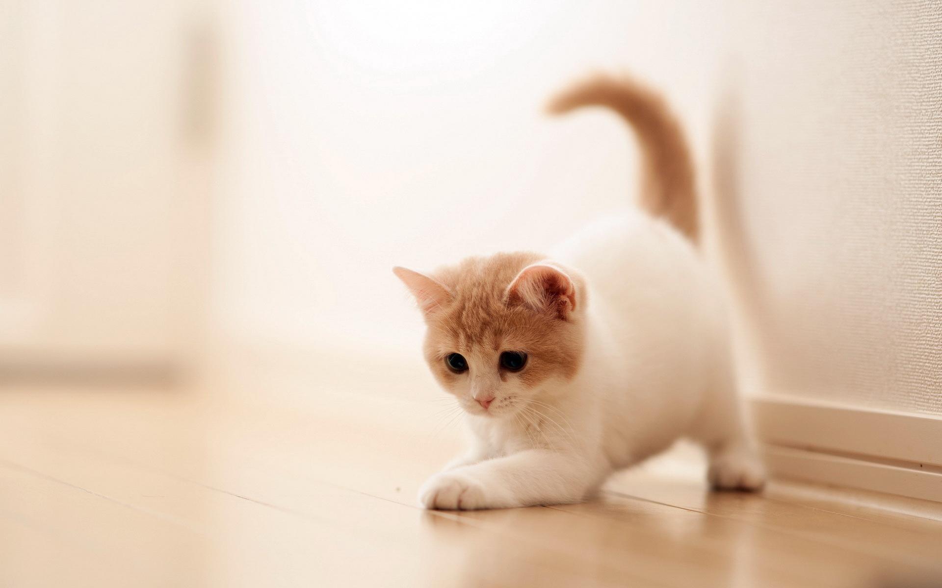 Cute Cat Wallpapers for Desktop (66+ images)