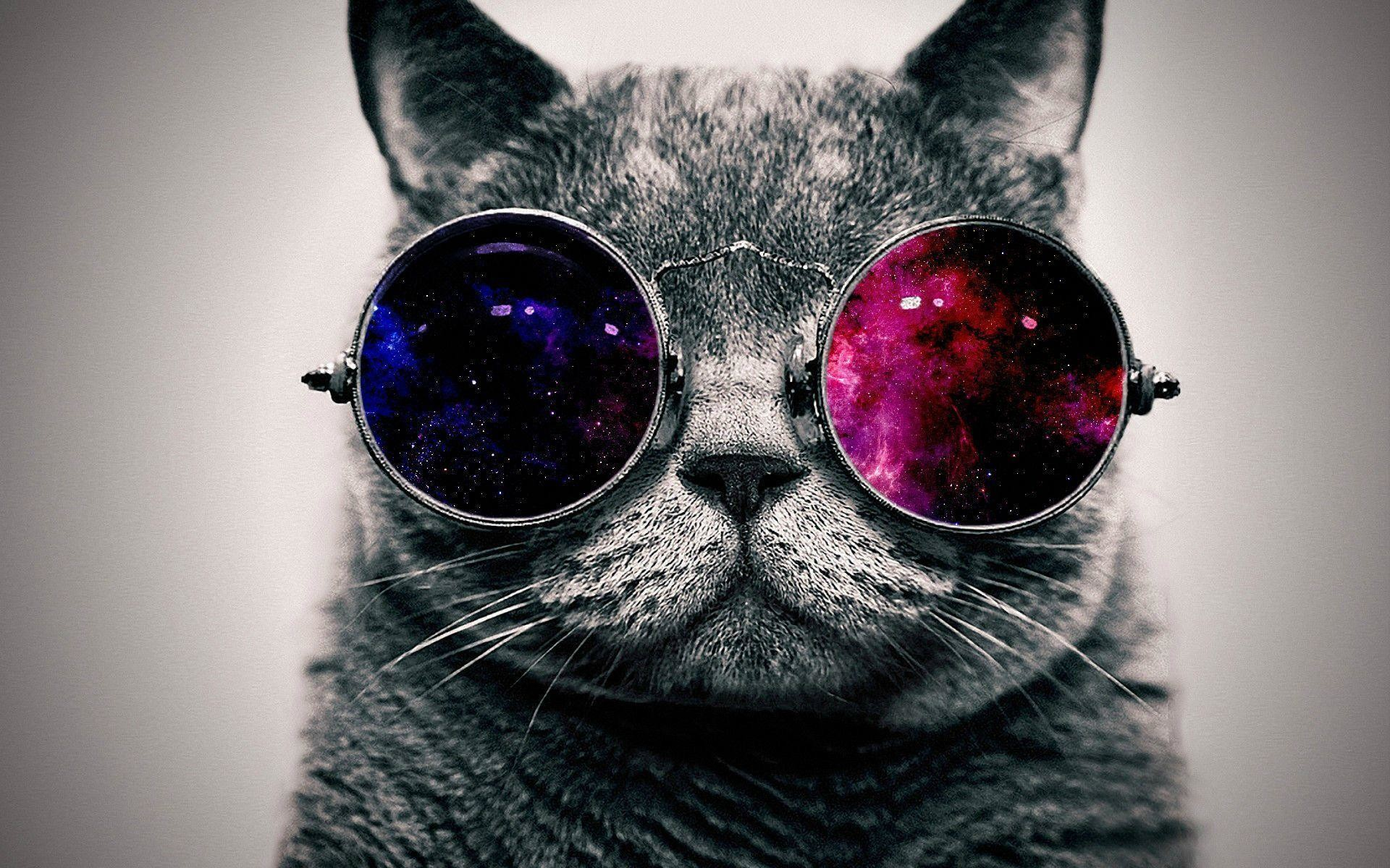 Cool Cat Wallpaper (71+ images)
