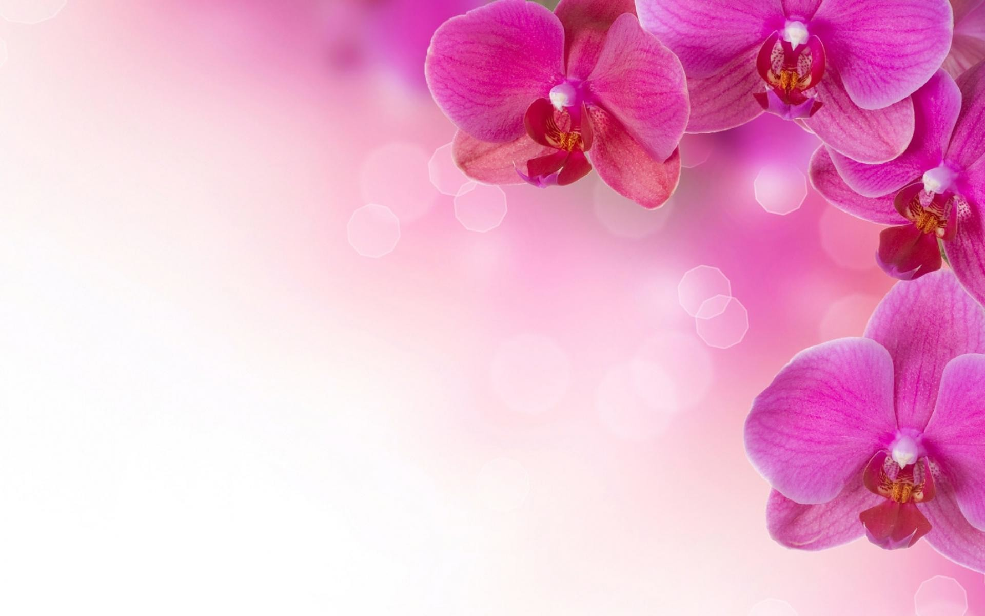 fuschia pink background 37 images