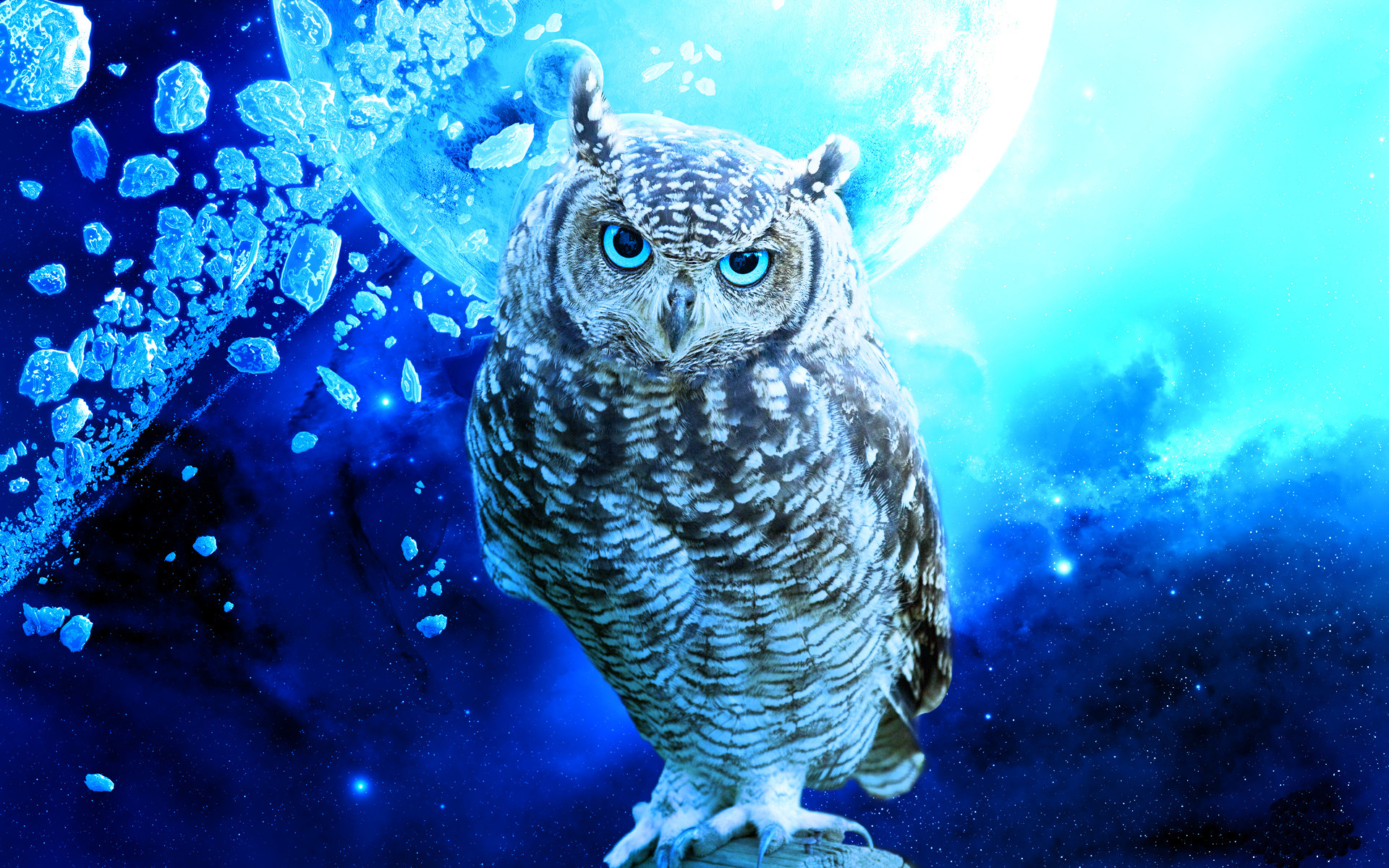 cute owl wallpaper (66+ images)
