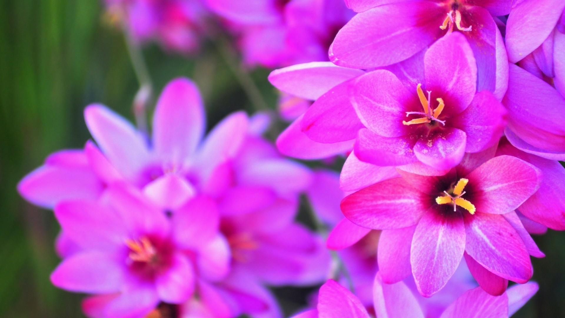 Name Jasmine Wallpaper 55 Images