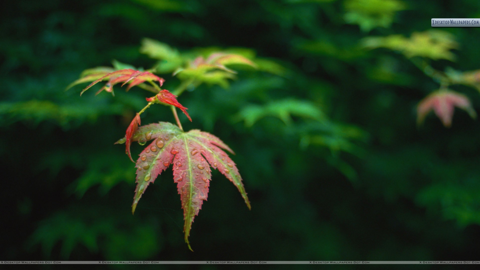 Green Leaves Wallpaper (66+ images)